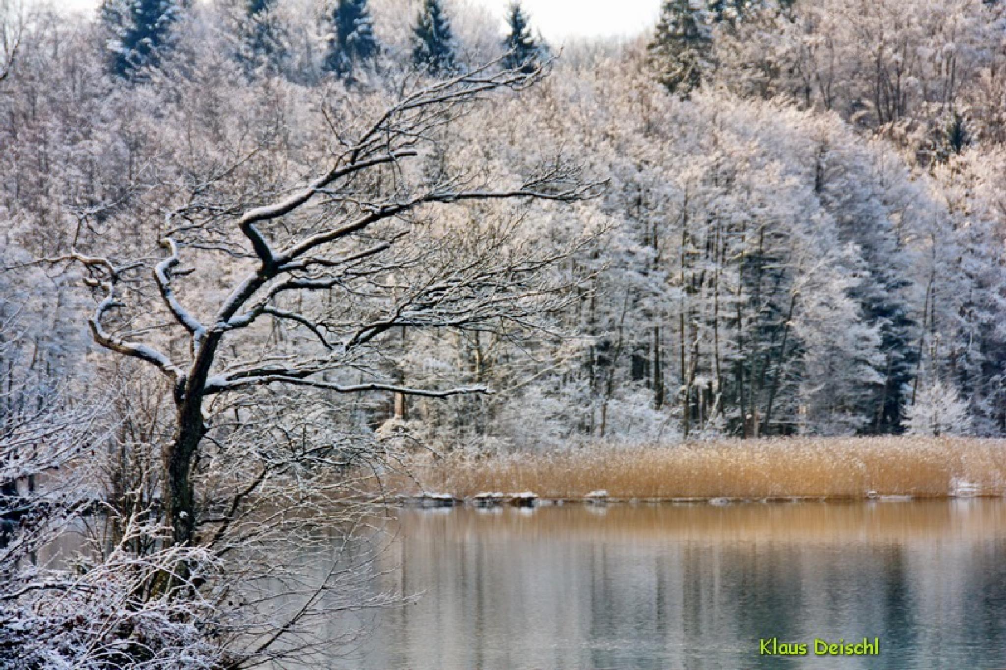 old tree in winter by farblichtspiele