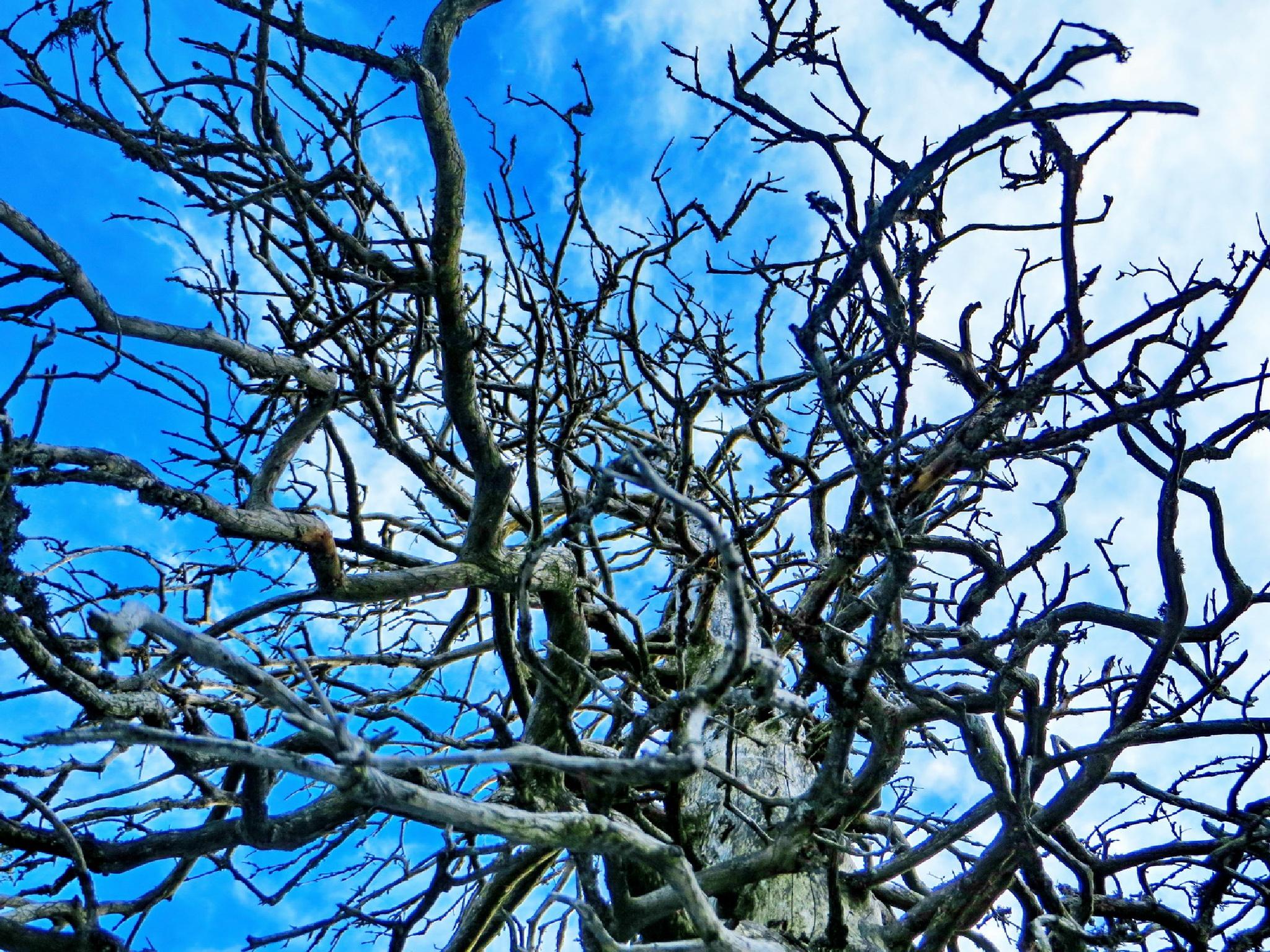 a spider web tree by klaus.deischl