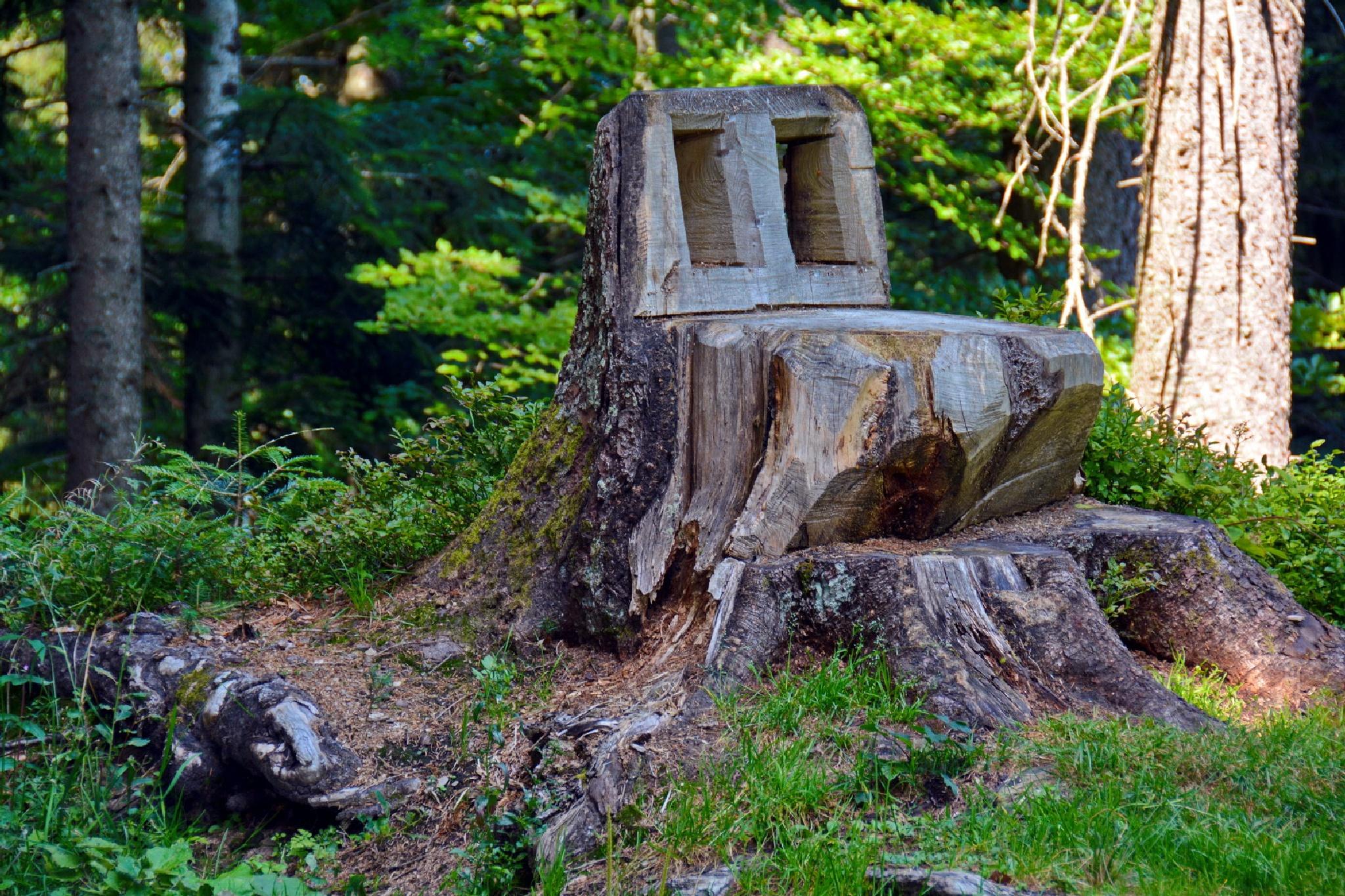 a natural chair by klaus.deischl