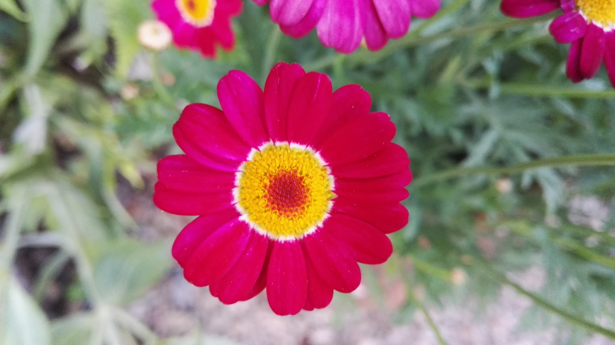 fresh red by ............................. Julian.G.Hicks