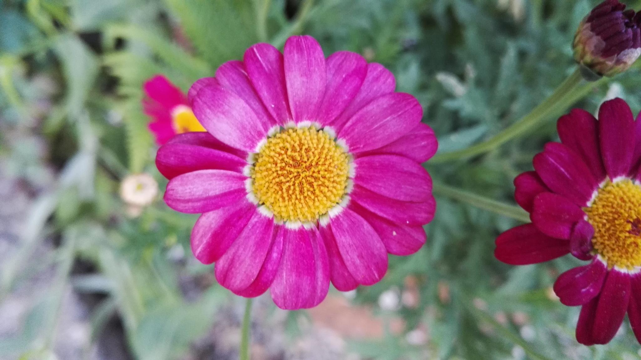 fresh pink by ............................. Julian.G.Hicks