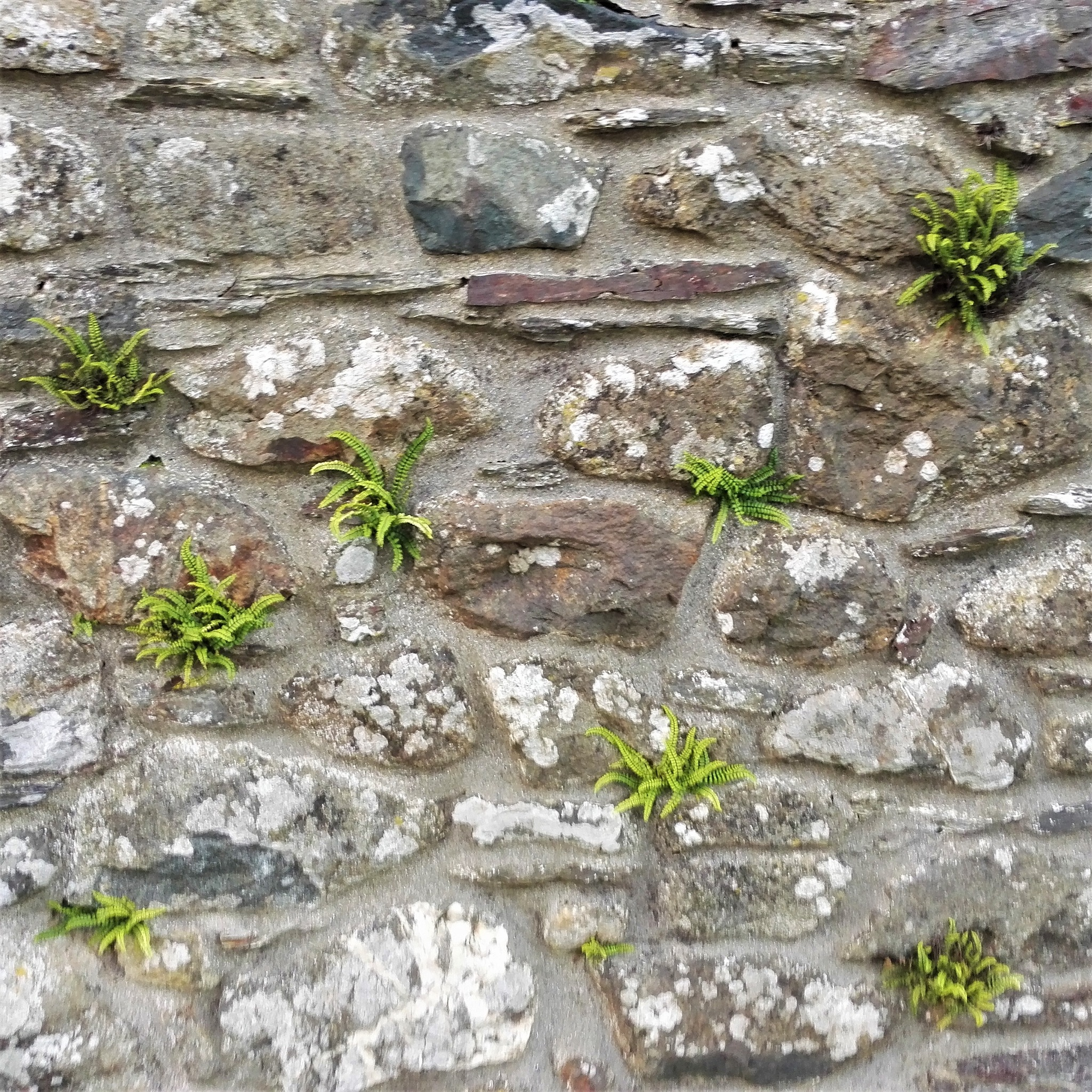 Wall Ferns by ............................. Julian.G.Hicks