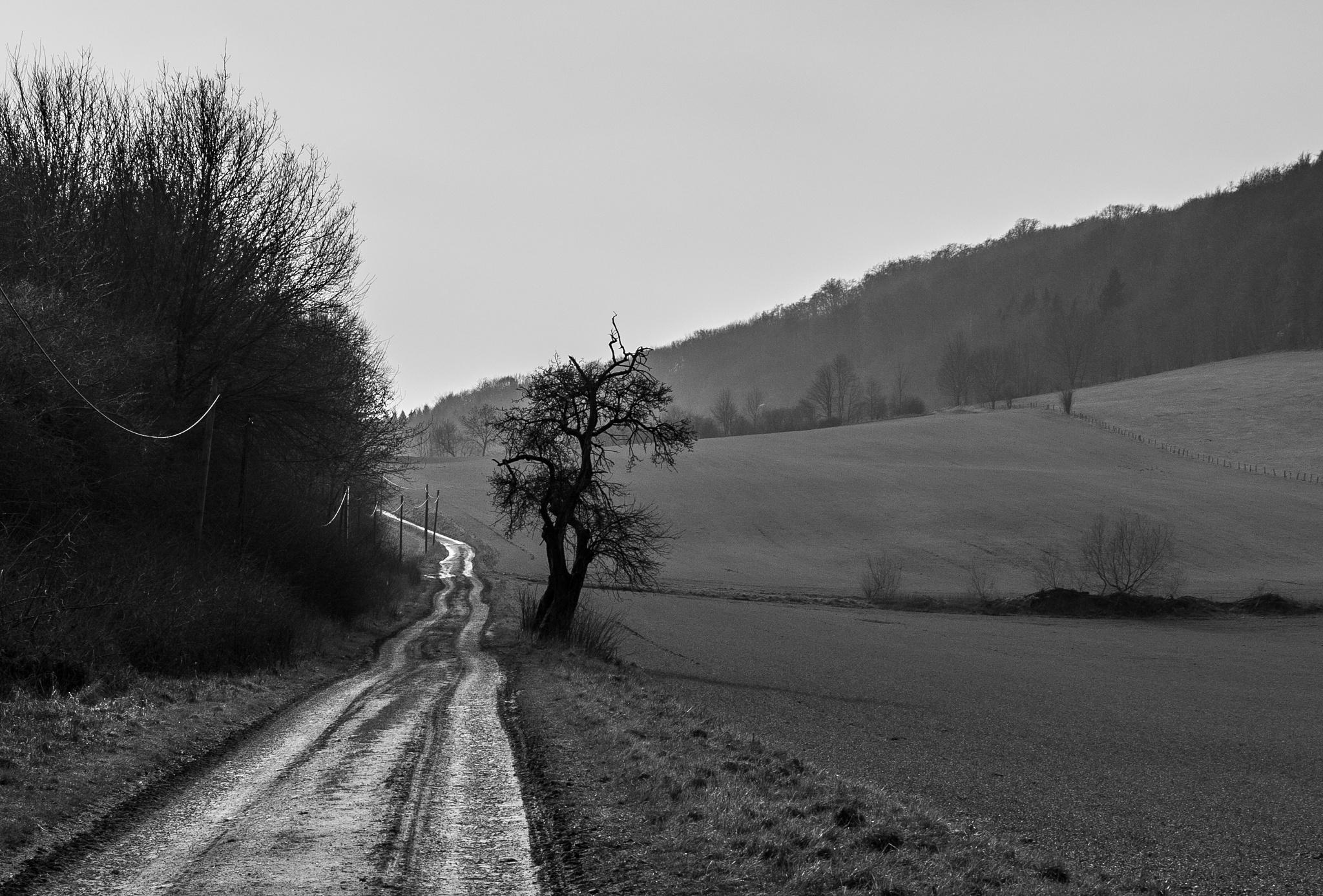 Güntgenburg by uwe.kiok