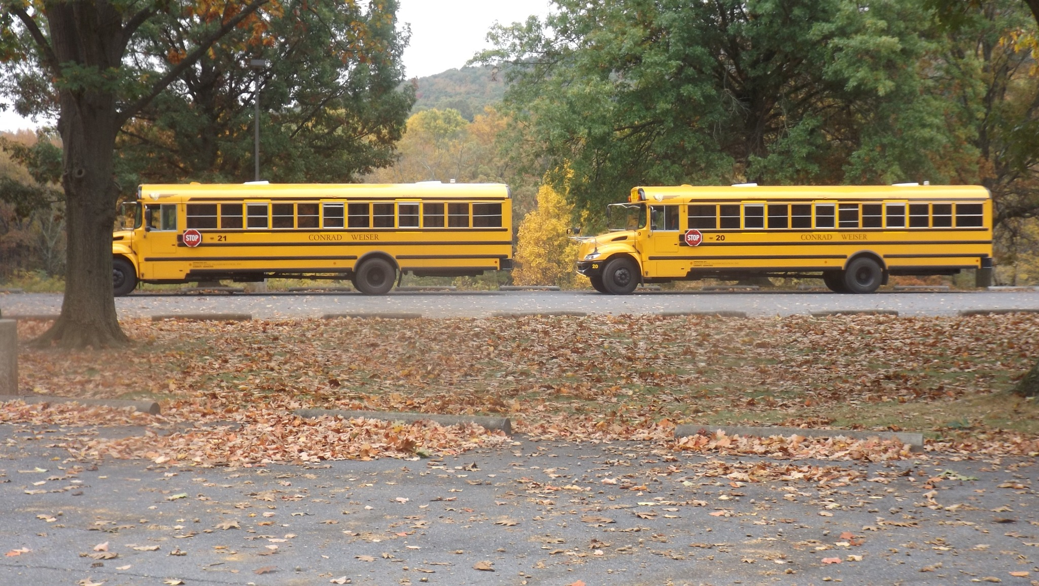 Double Dutch Bus by MicheleHoffman
