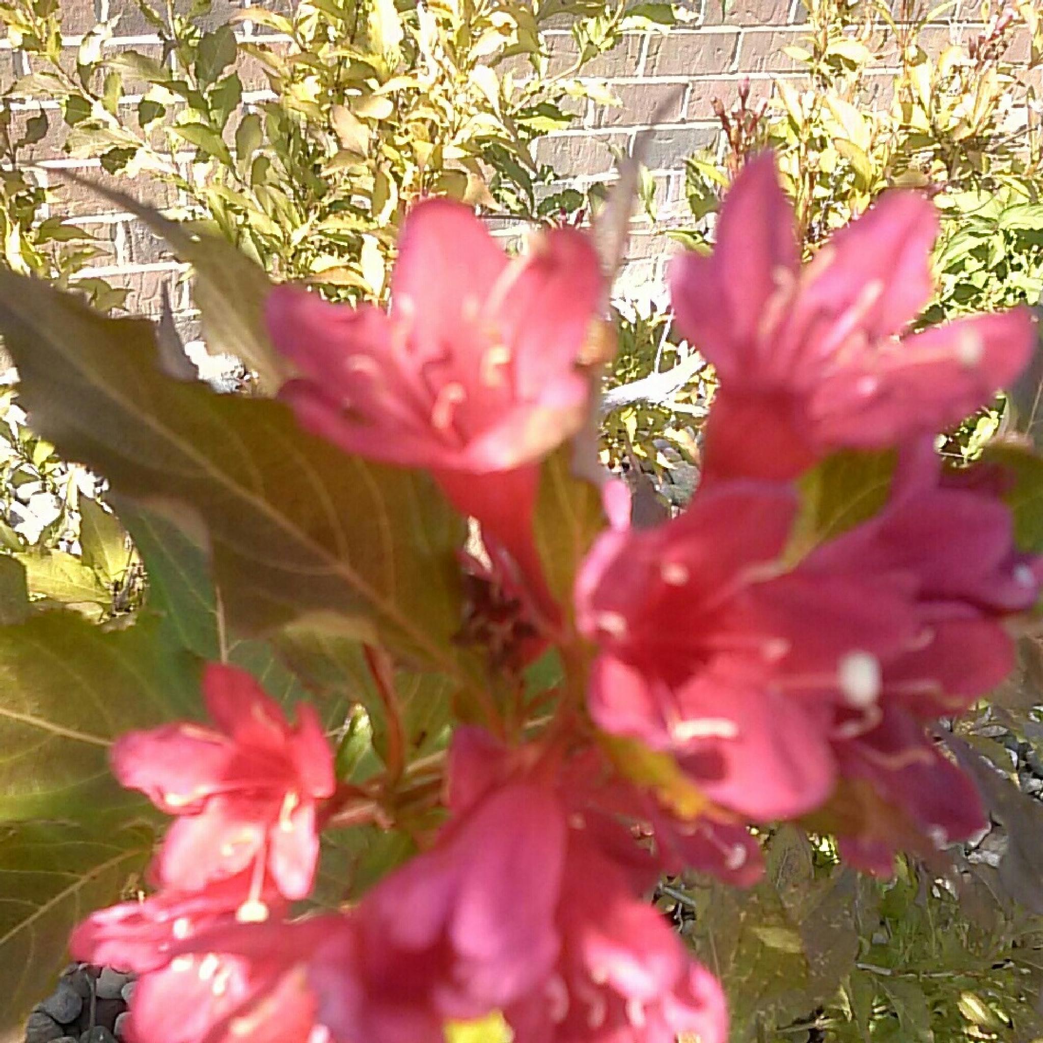 Flower  by yom.sant