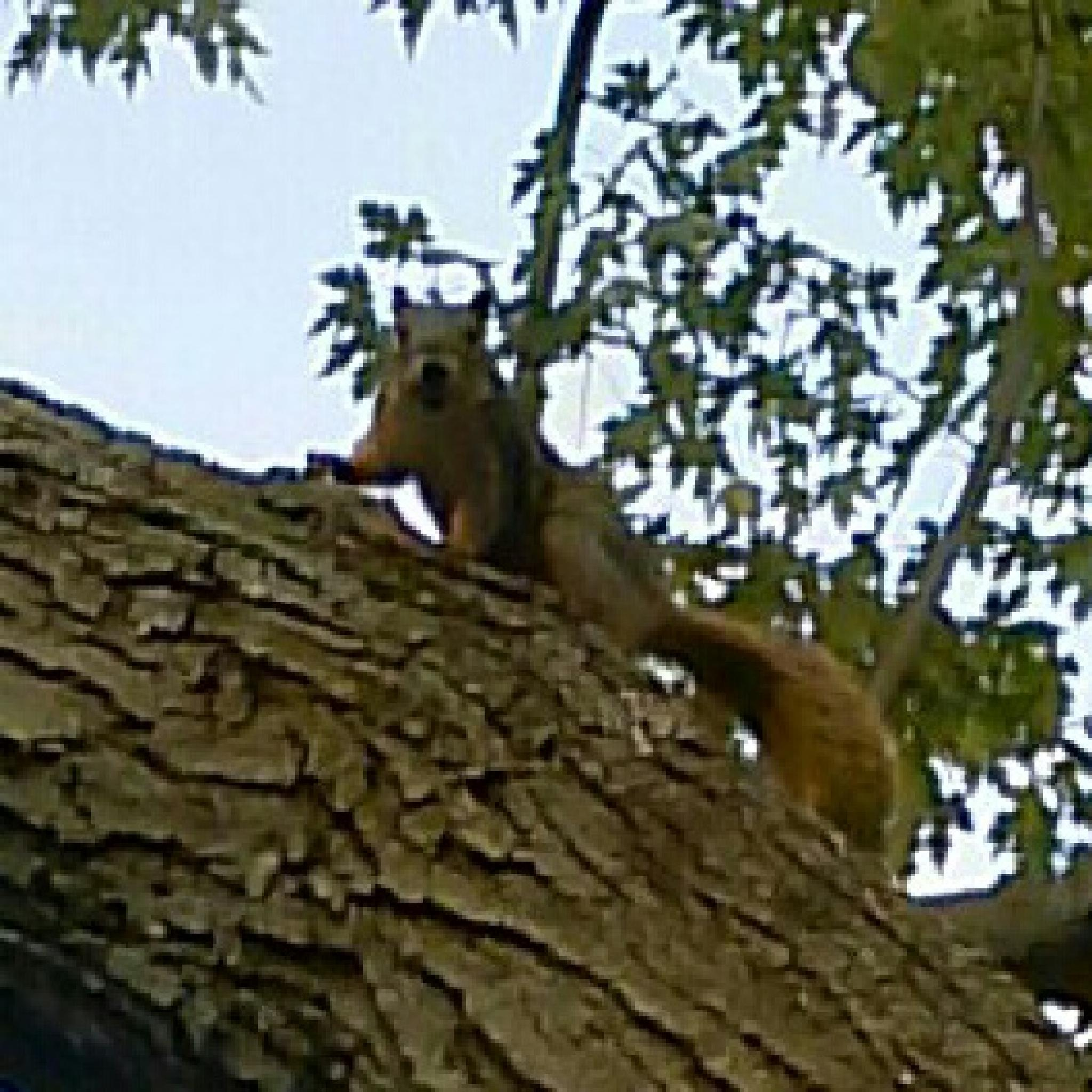 Squirrel by yom.sant
