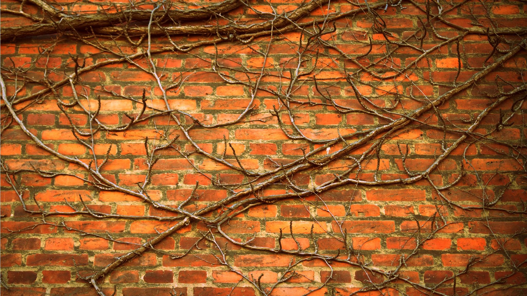 Brick wall by linda.avdeicuka