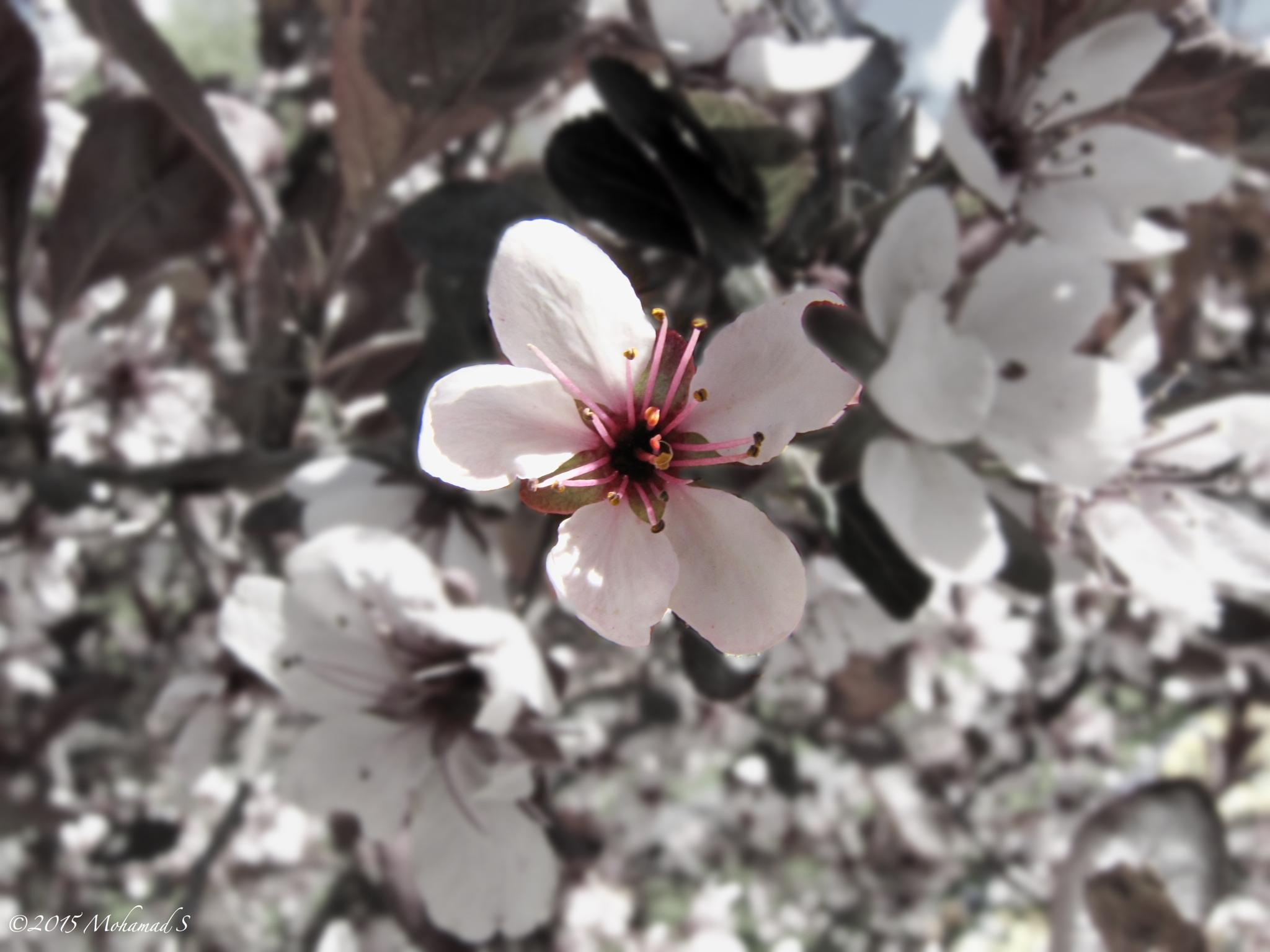 flowerssssssssssss by Mohamad Salahaldin