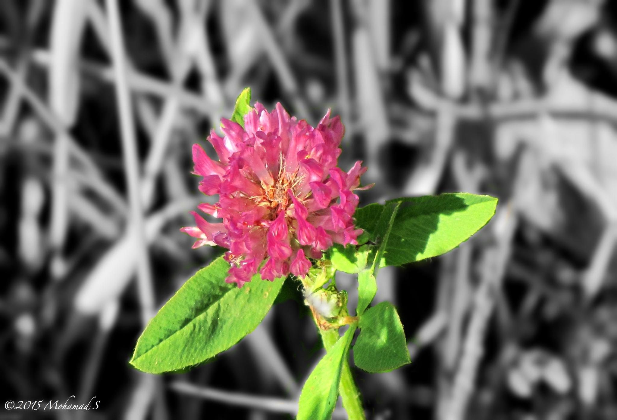 flower by Mohamad Salahaldin