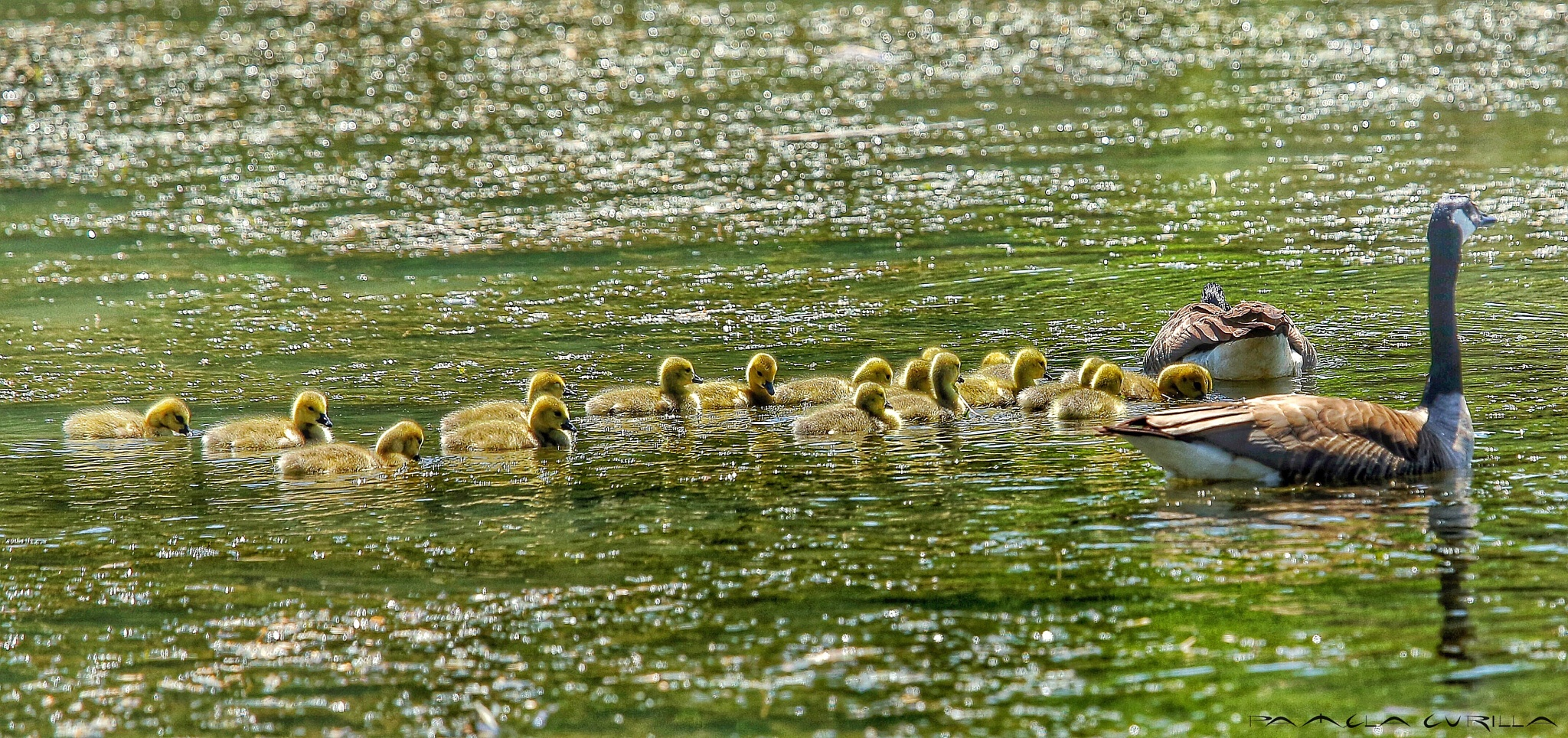That's Quite A Large Family.  by PamelaZ