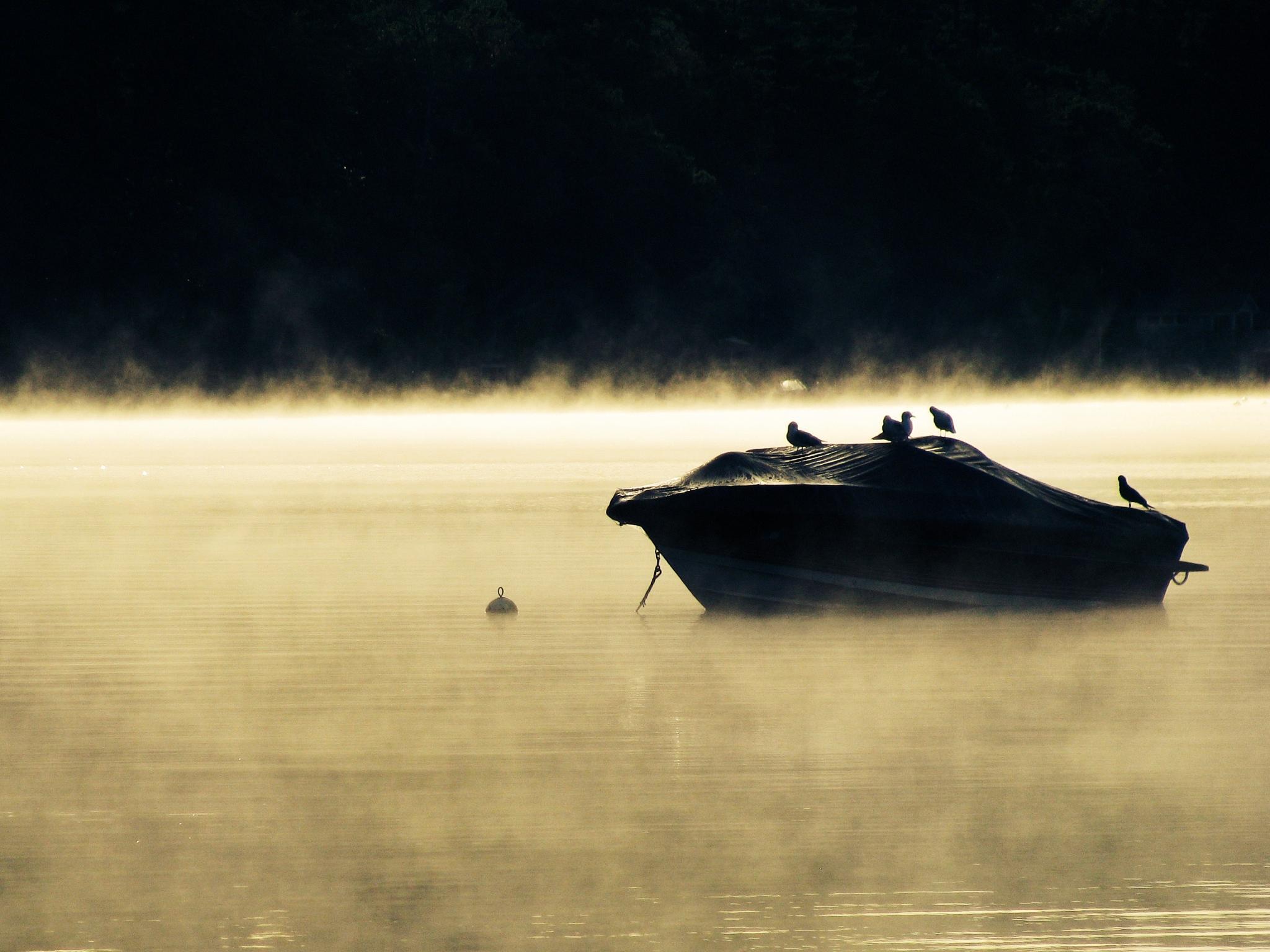 Morning Mist by PamelaZ