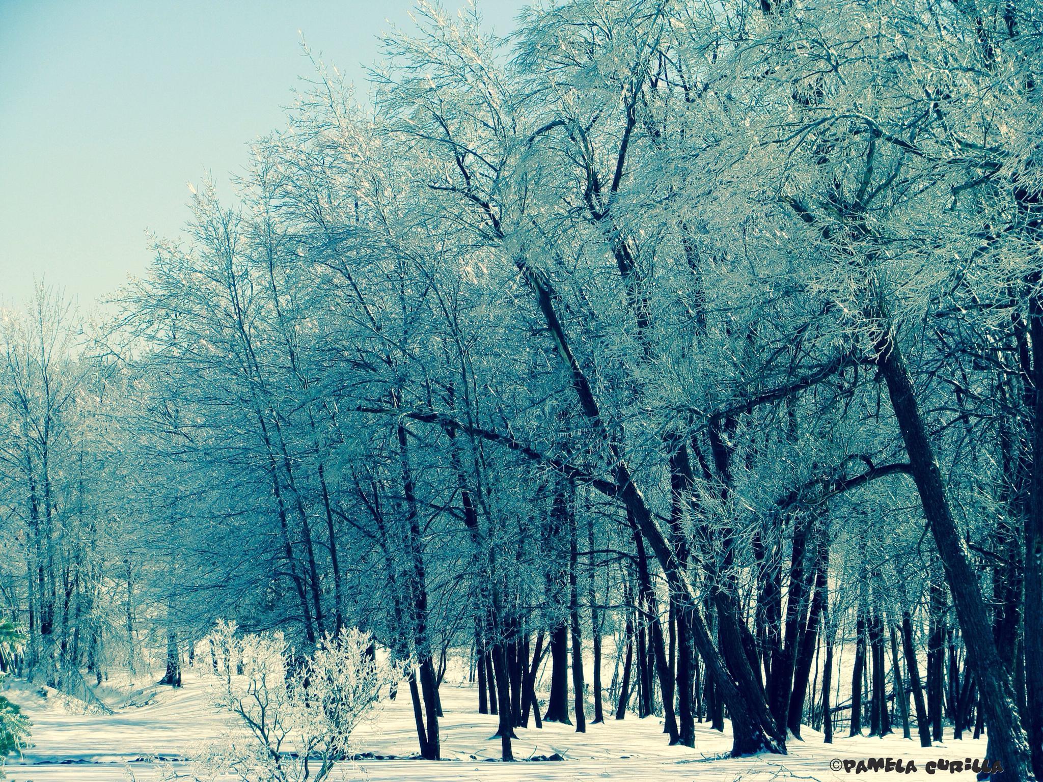 Ice Storm by PamelaZ