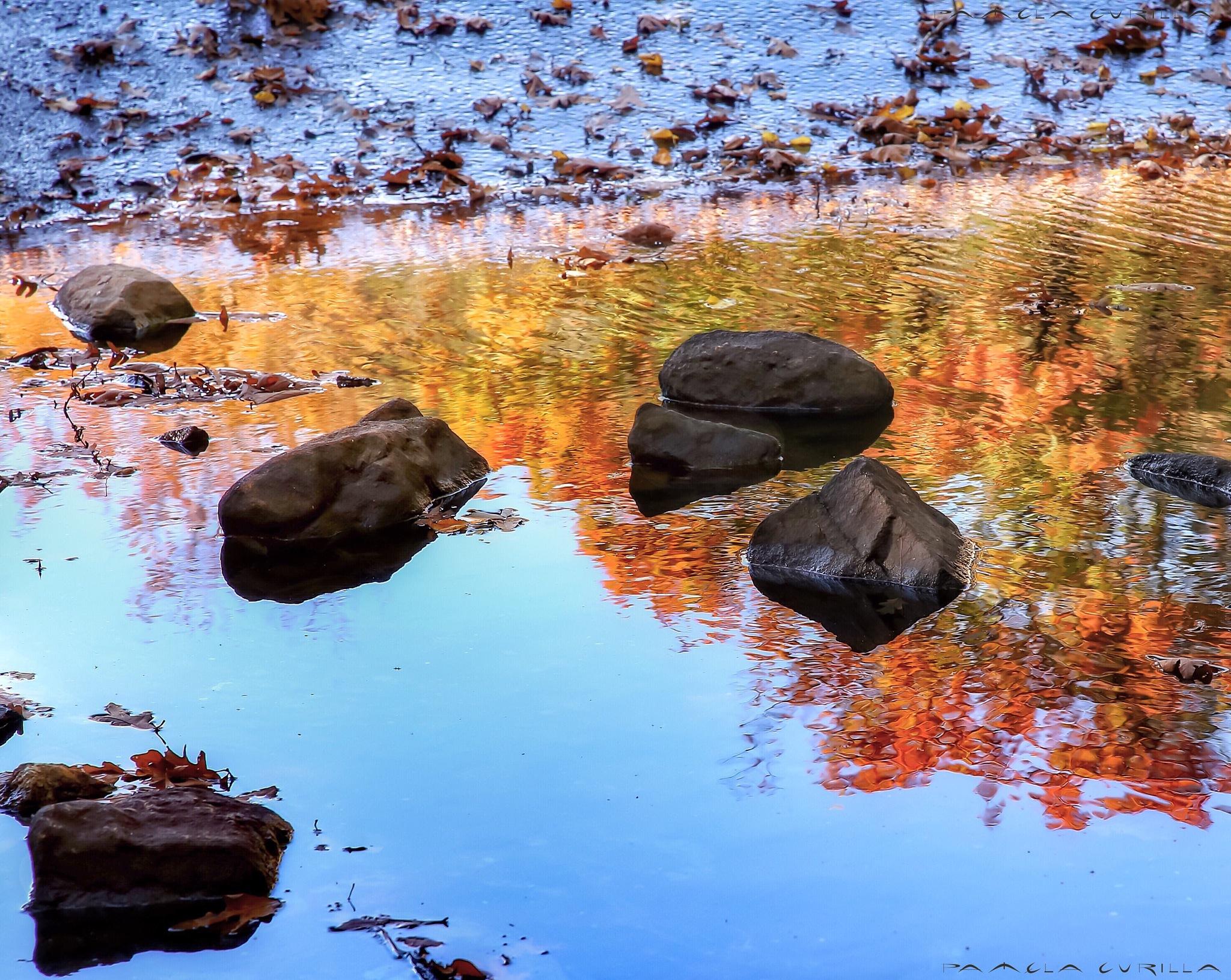 Fall Colors by PamelaZ