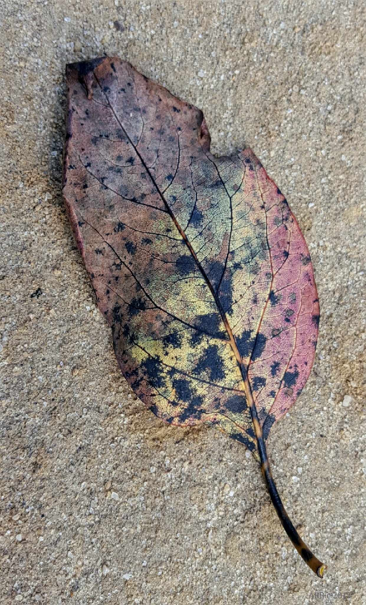 Autumn :~D by alice.r.ballard