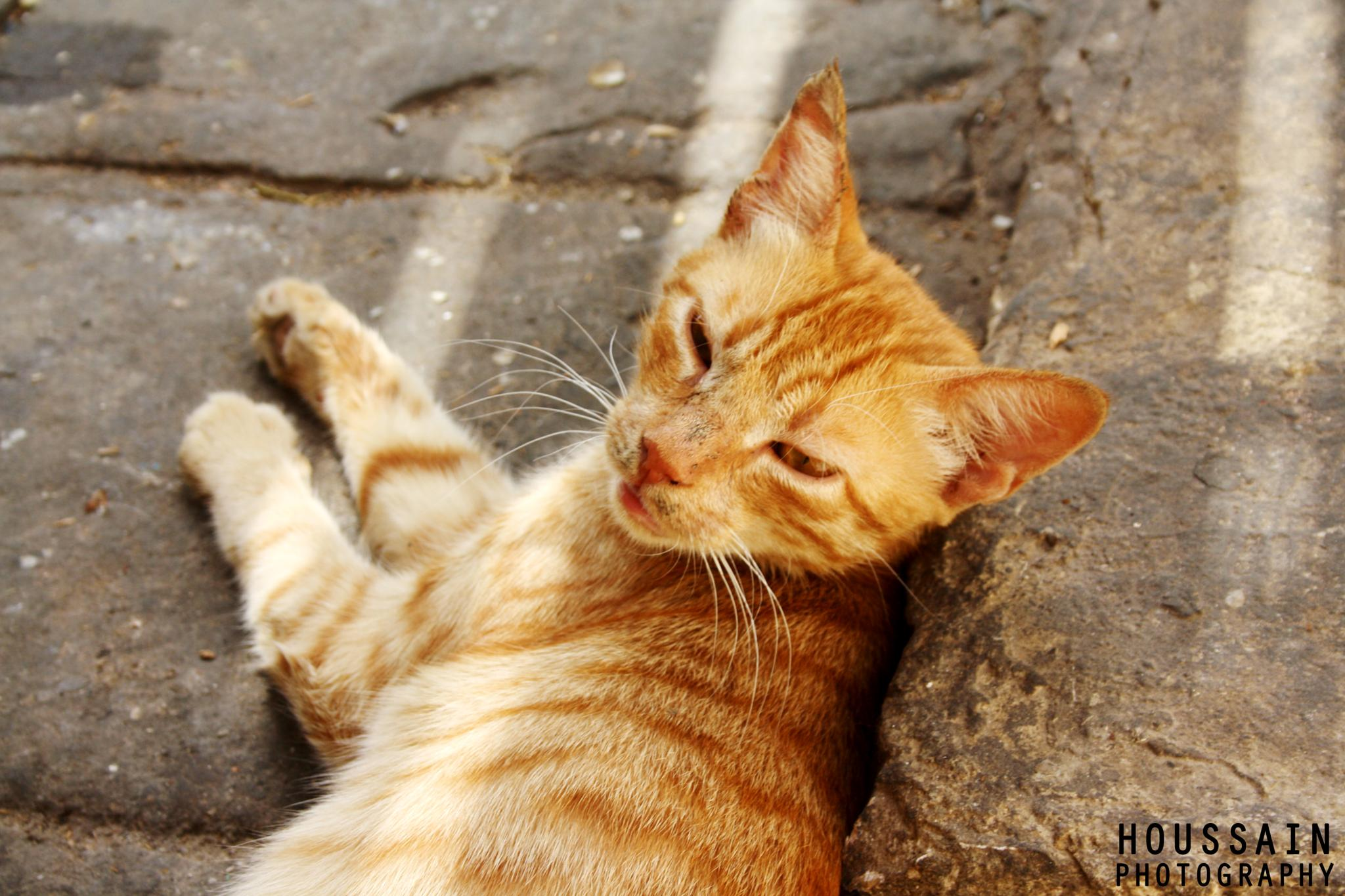 !Cat by Houssain Messoudi