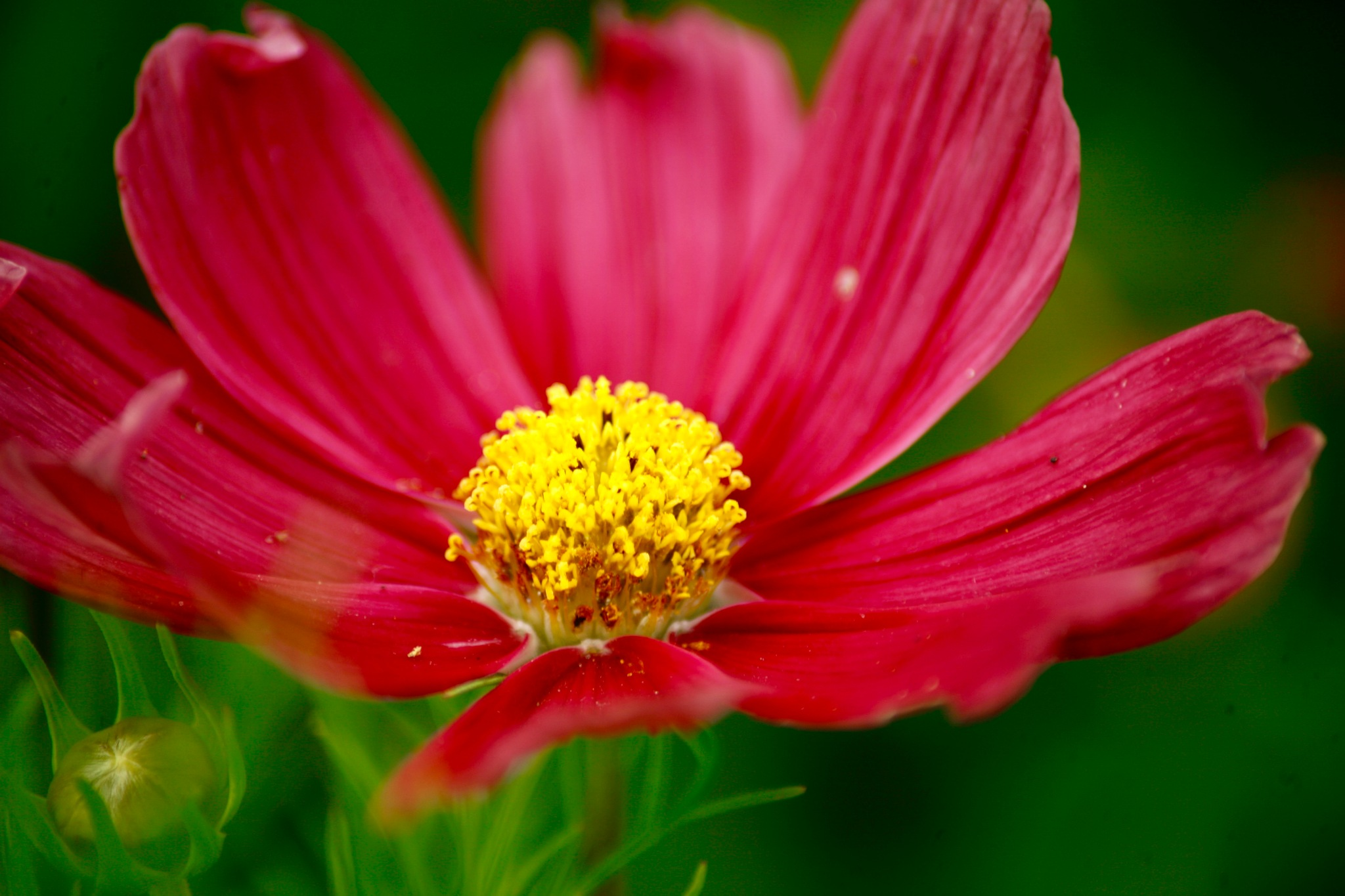 Red flower by Roy J