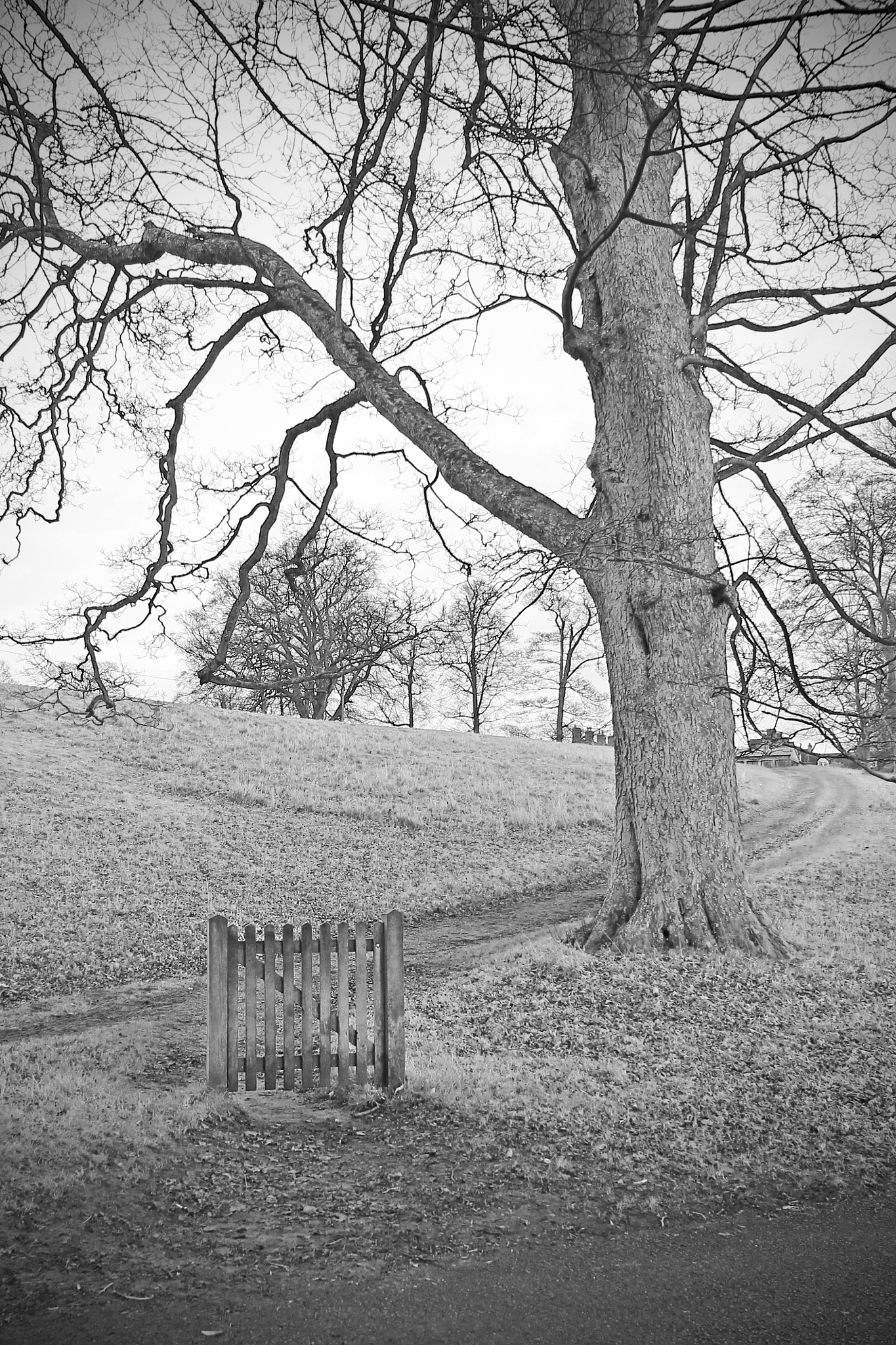 Gate in the park by David R Murphy