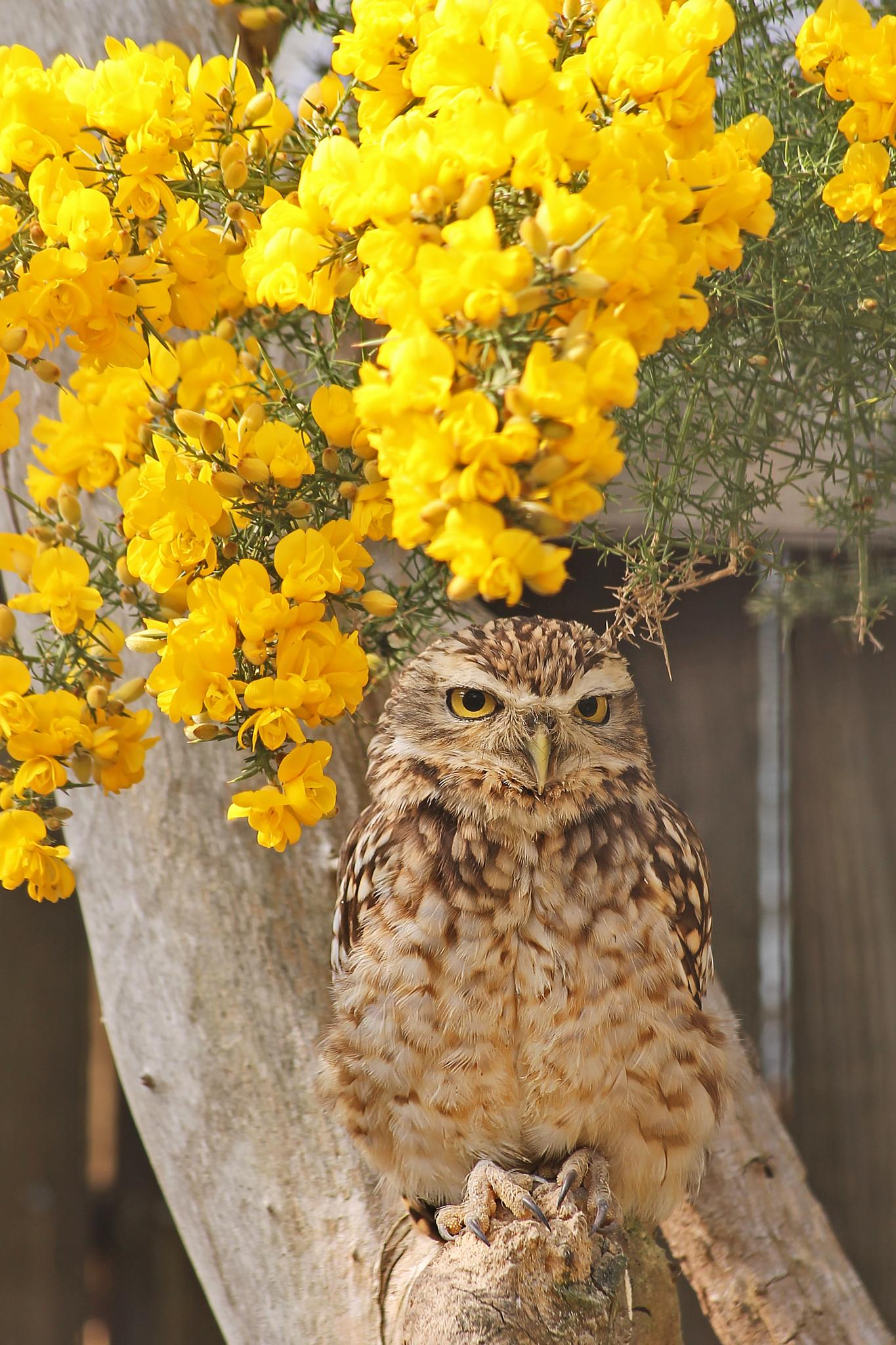 who gives a hoot by David R Murphy