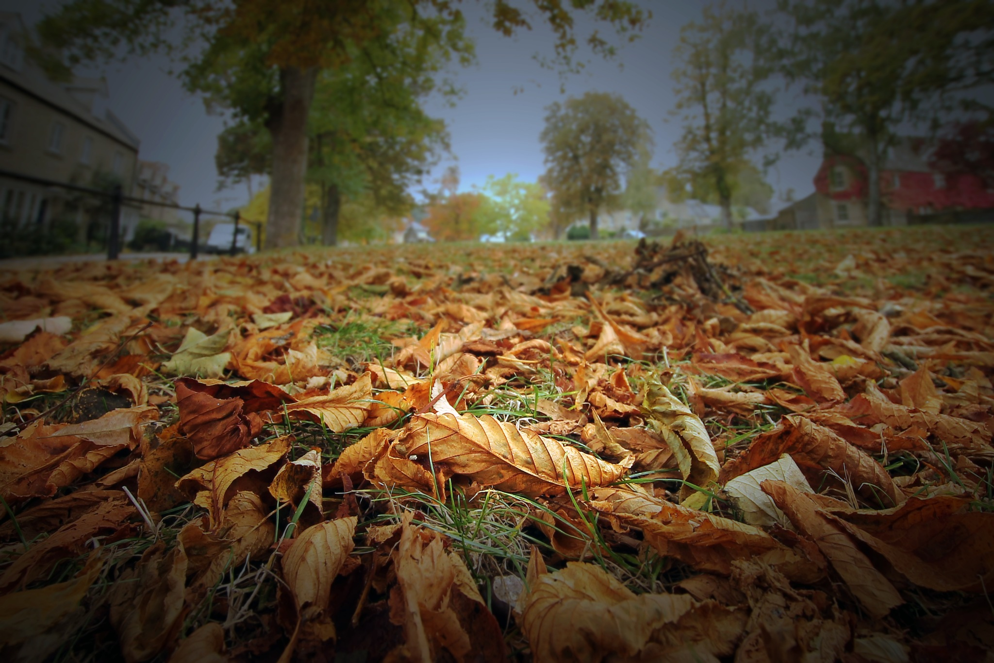 autumn's here by David R Murphy