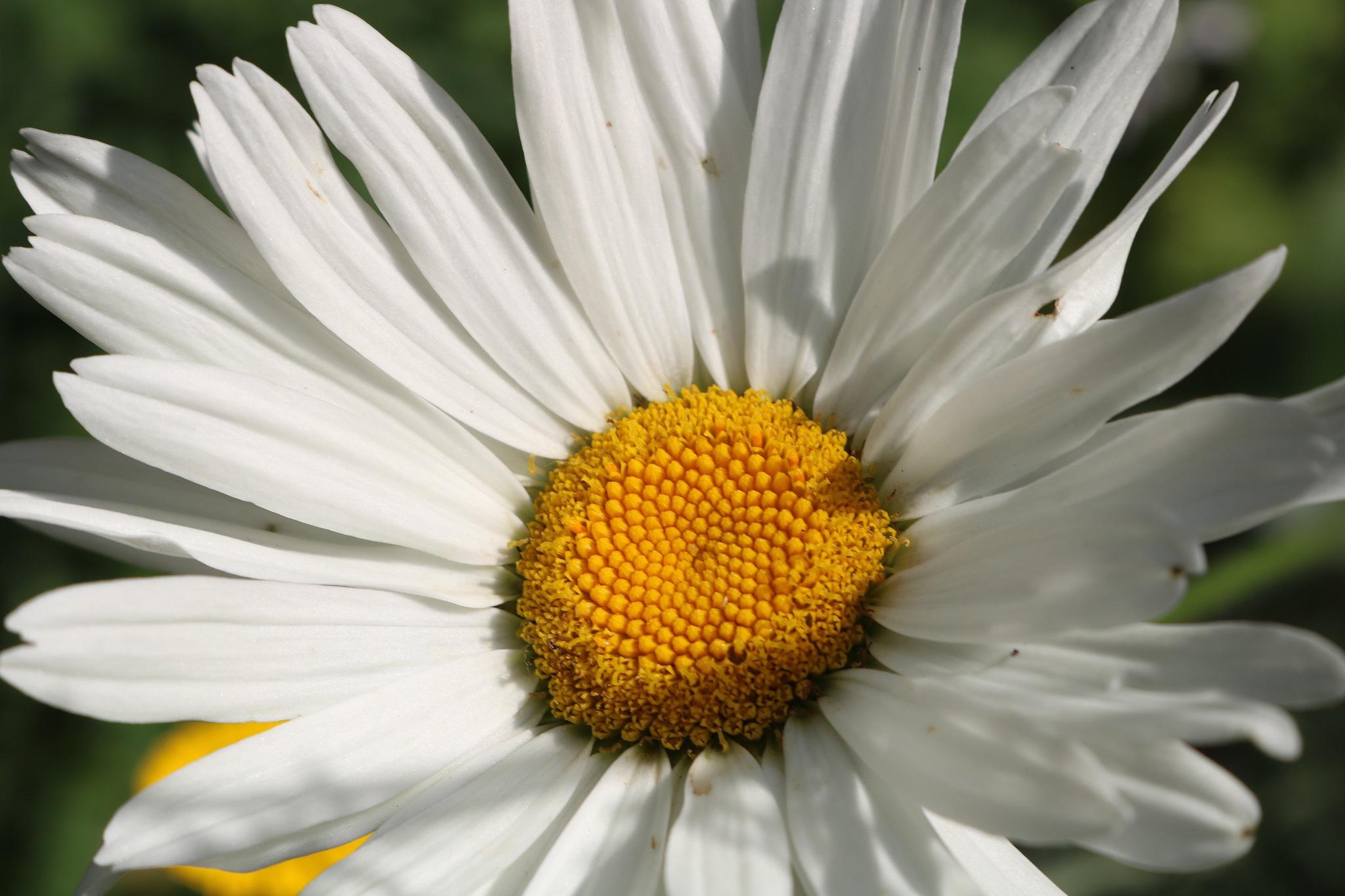 close up by zvnktomasevic