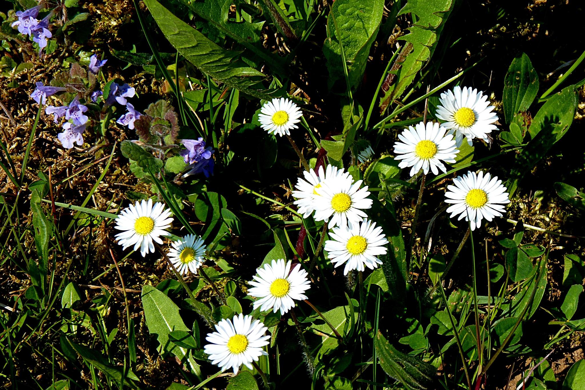 flowers by zvnktomasevic