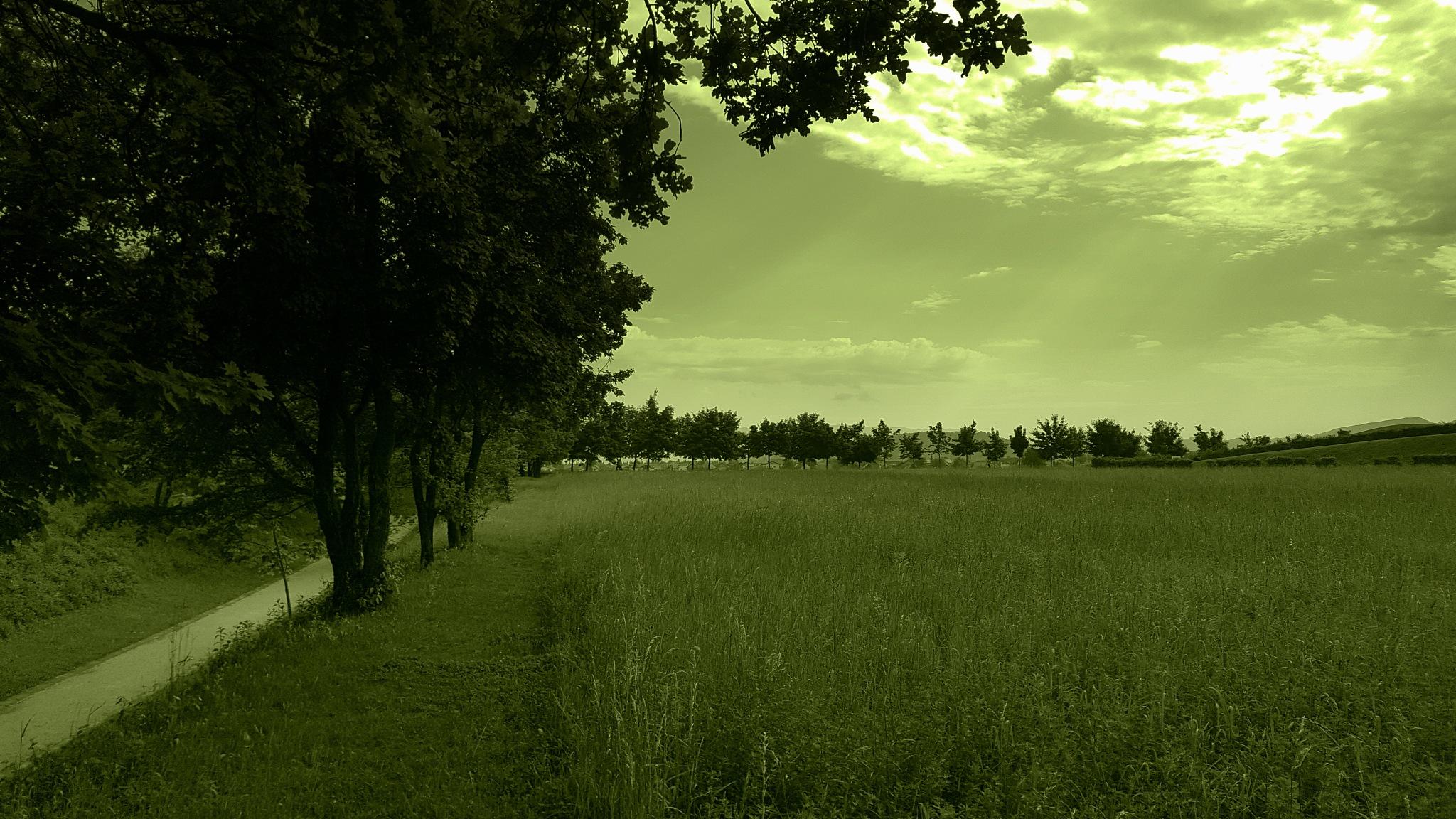 field - polje by zvnktomasevic