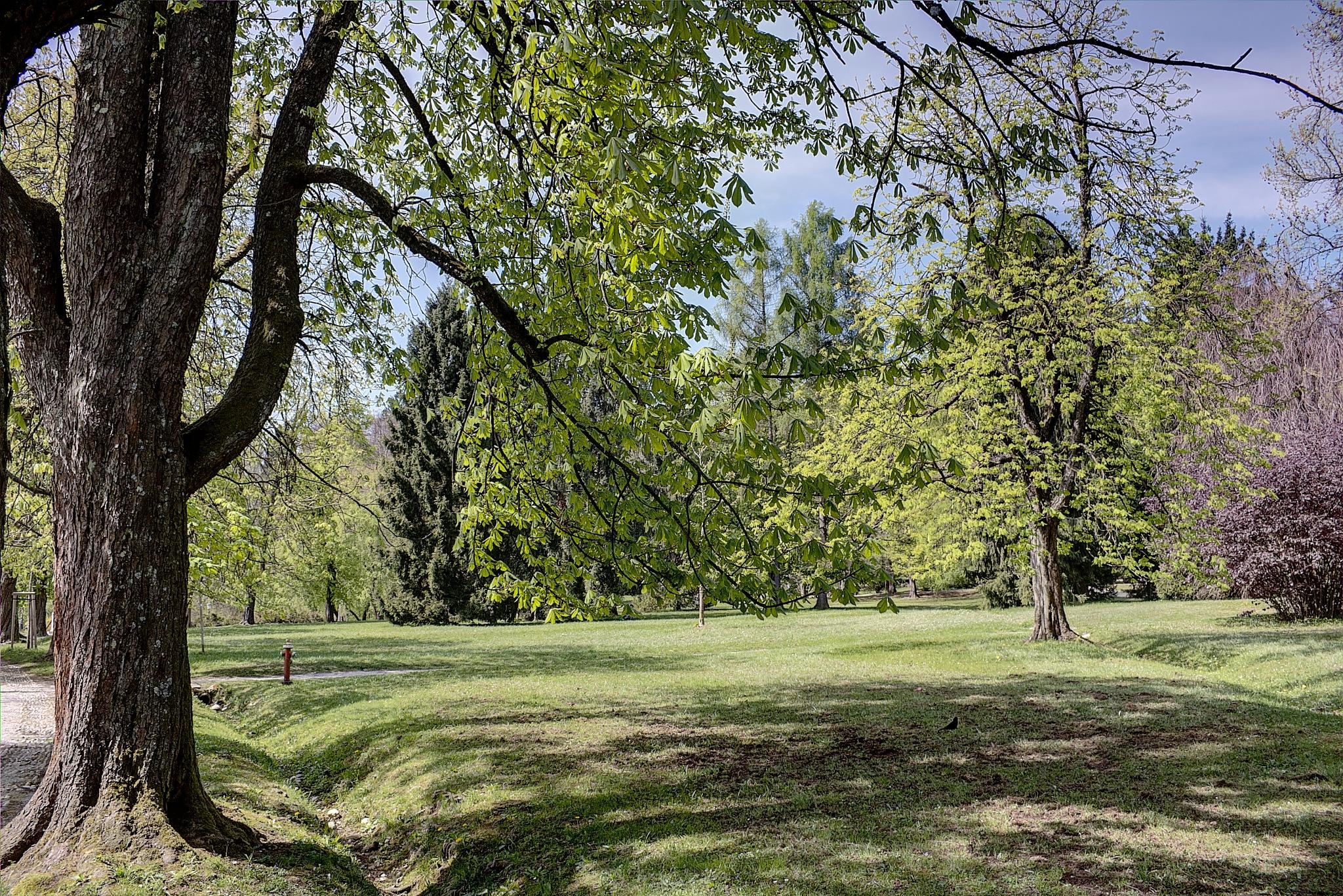 Trees in the park Tivoli, Ljubljana by zvnktomasevic