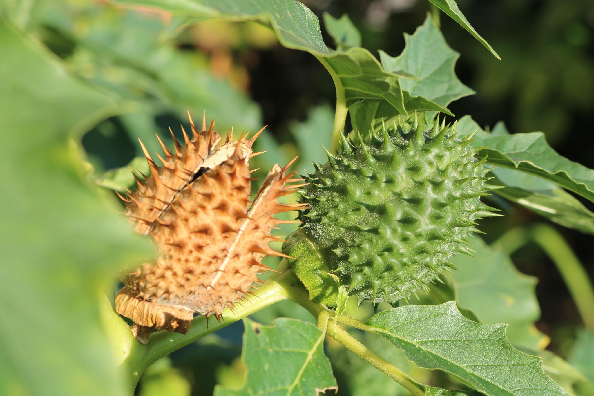 plant by zvnktomasevic