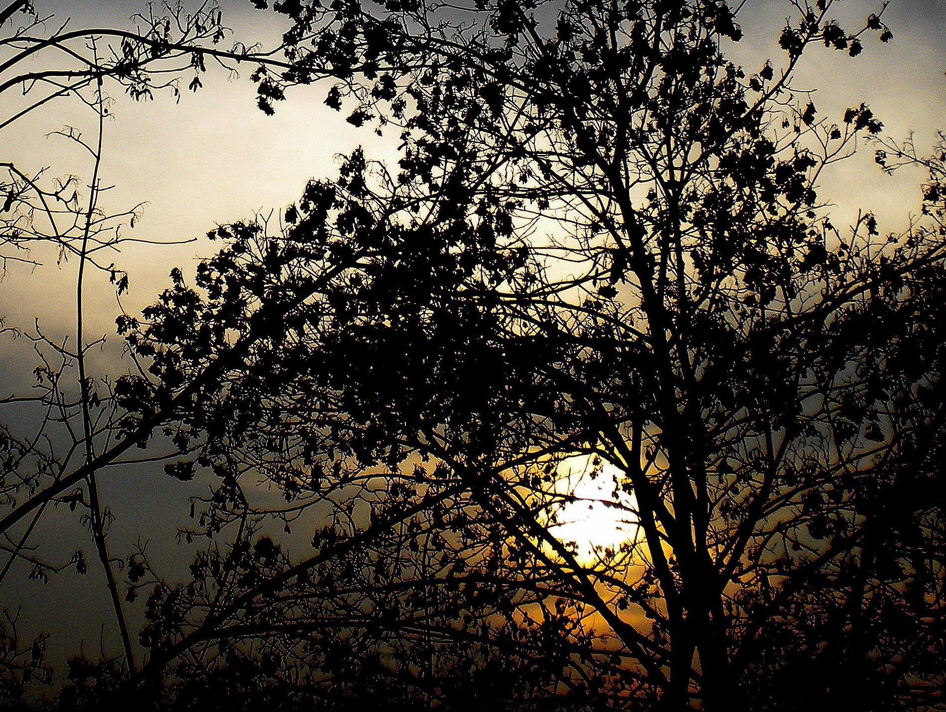 Sunrise by zvnktomasevic
