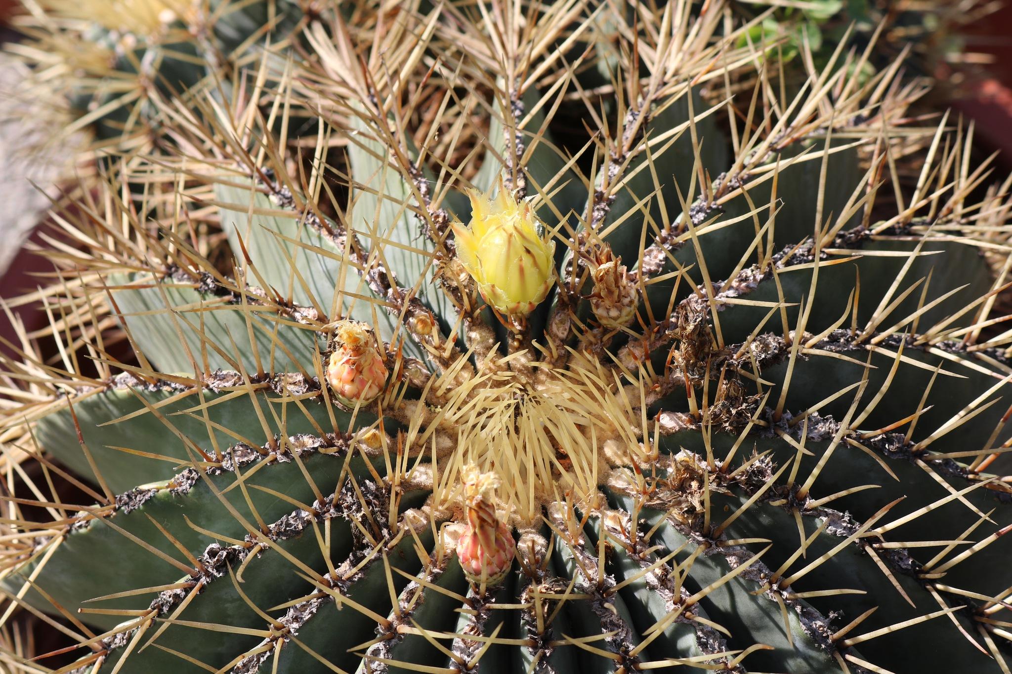 kaktus by zvnktomasevic