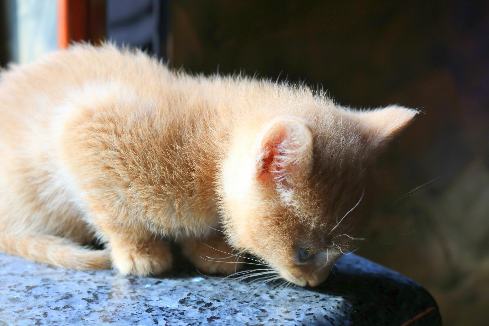 young cat-female by zvnktomasevic