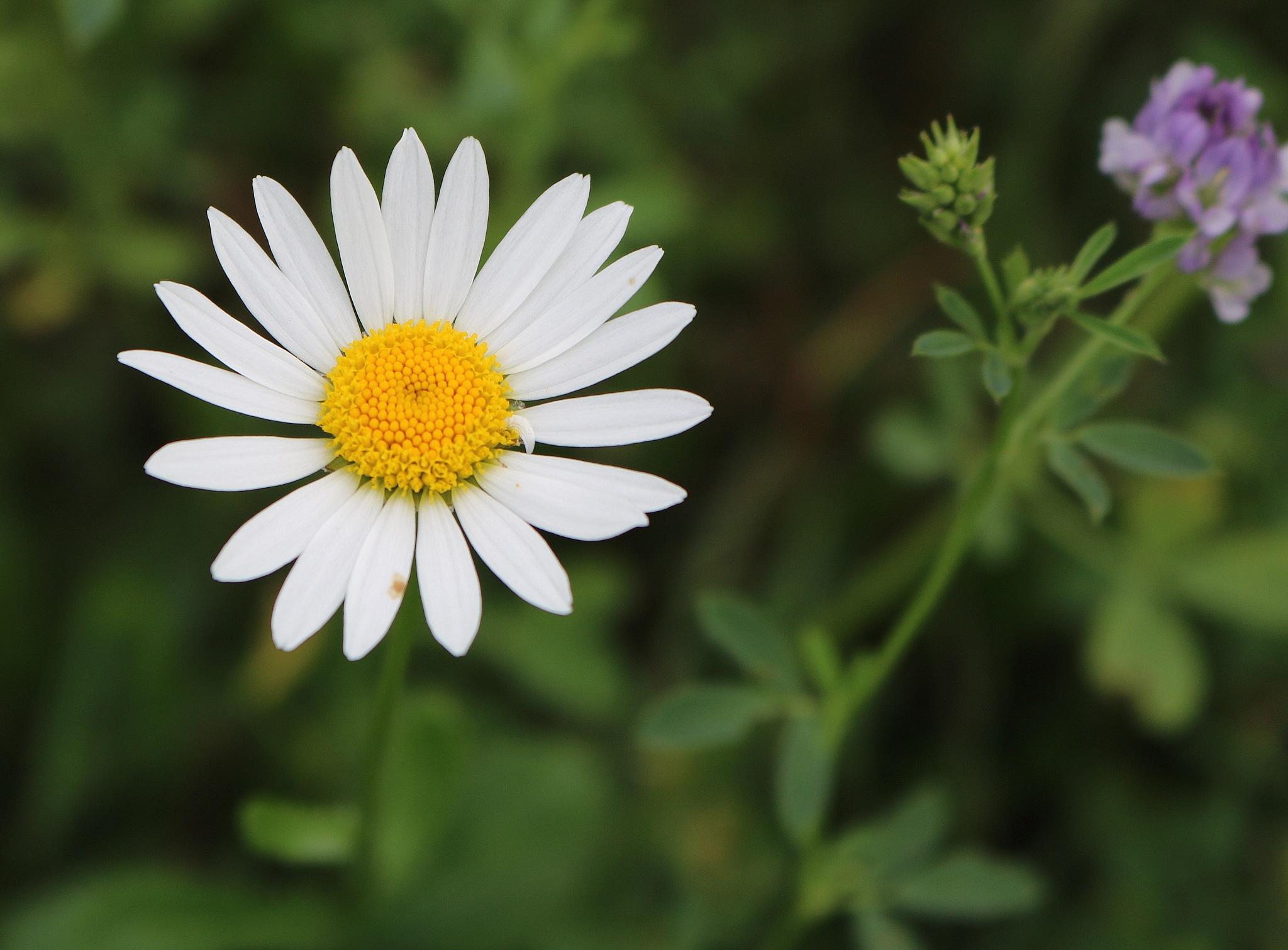 flower by zvnktomasevic