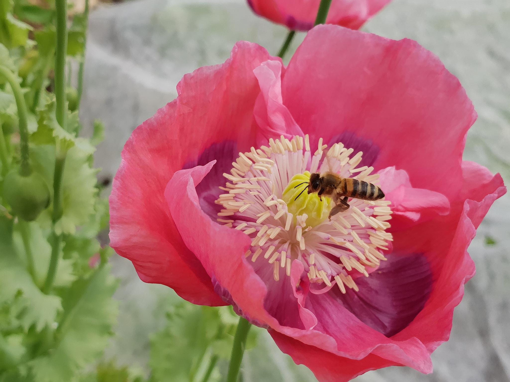 Nak in čebela by zvnktomasevic