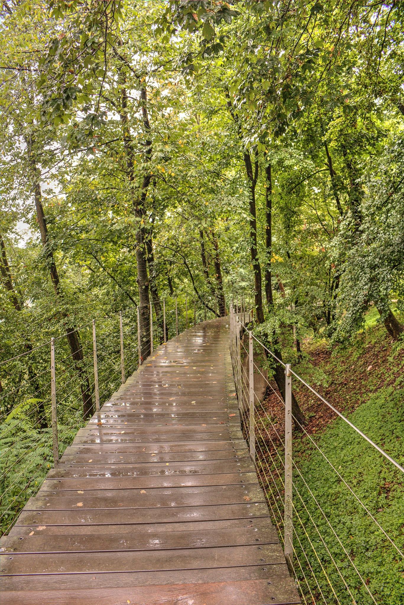 Grajski hrib, pot v mesto Ljubljana by zvnktomasevic