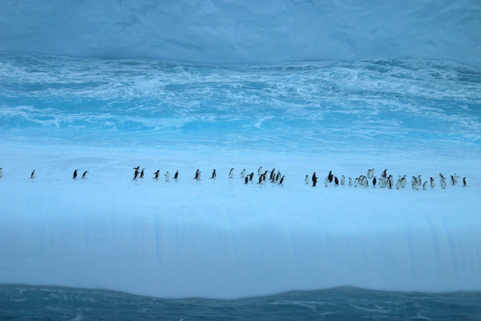 Penguins on a ice floe off Elephant island Antarctica by ian.dinmore