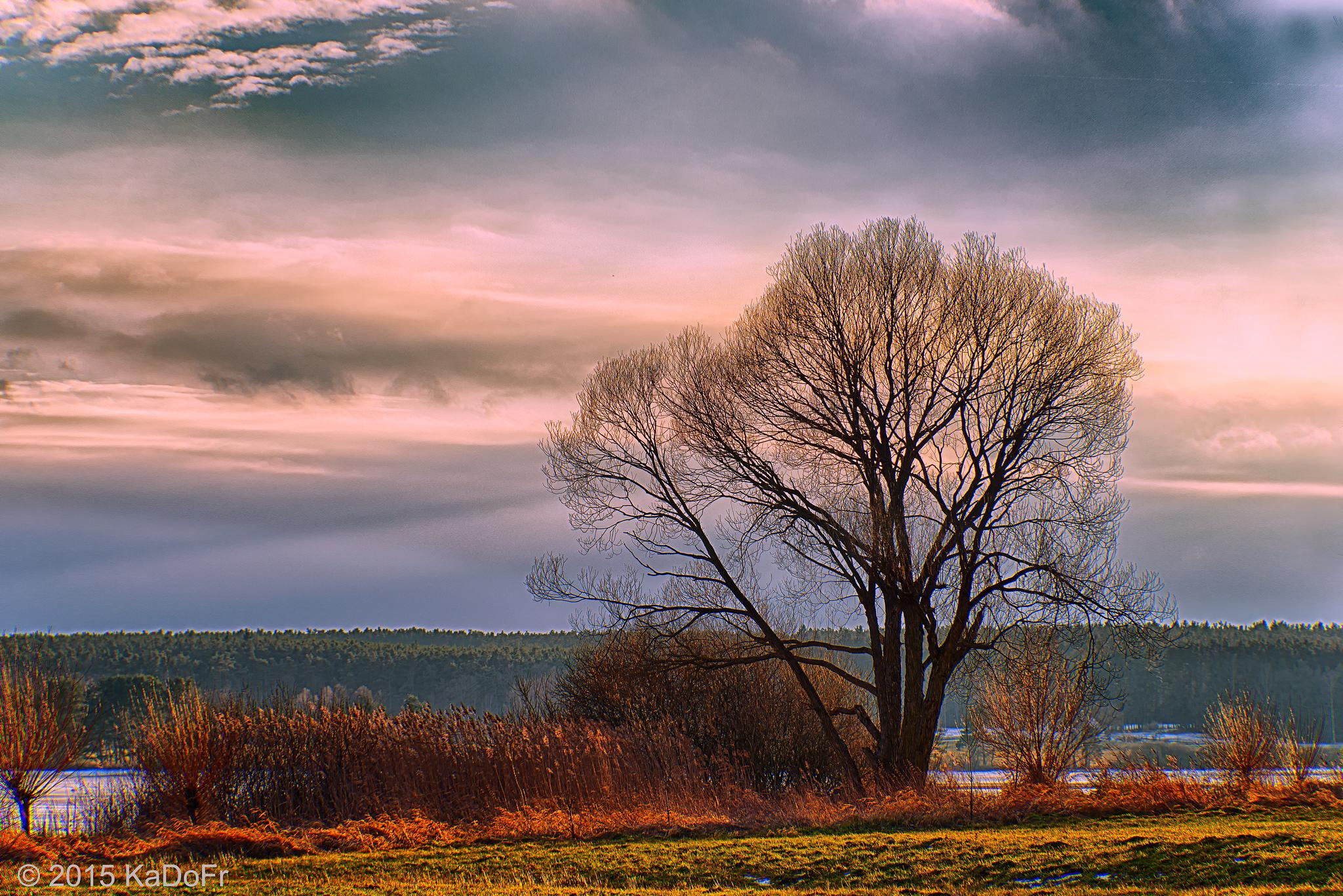 "One tree at sunset on the pond ""Svet"" in Trebon - South Bohemia by Karel Dobes"