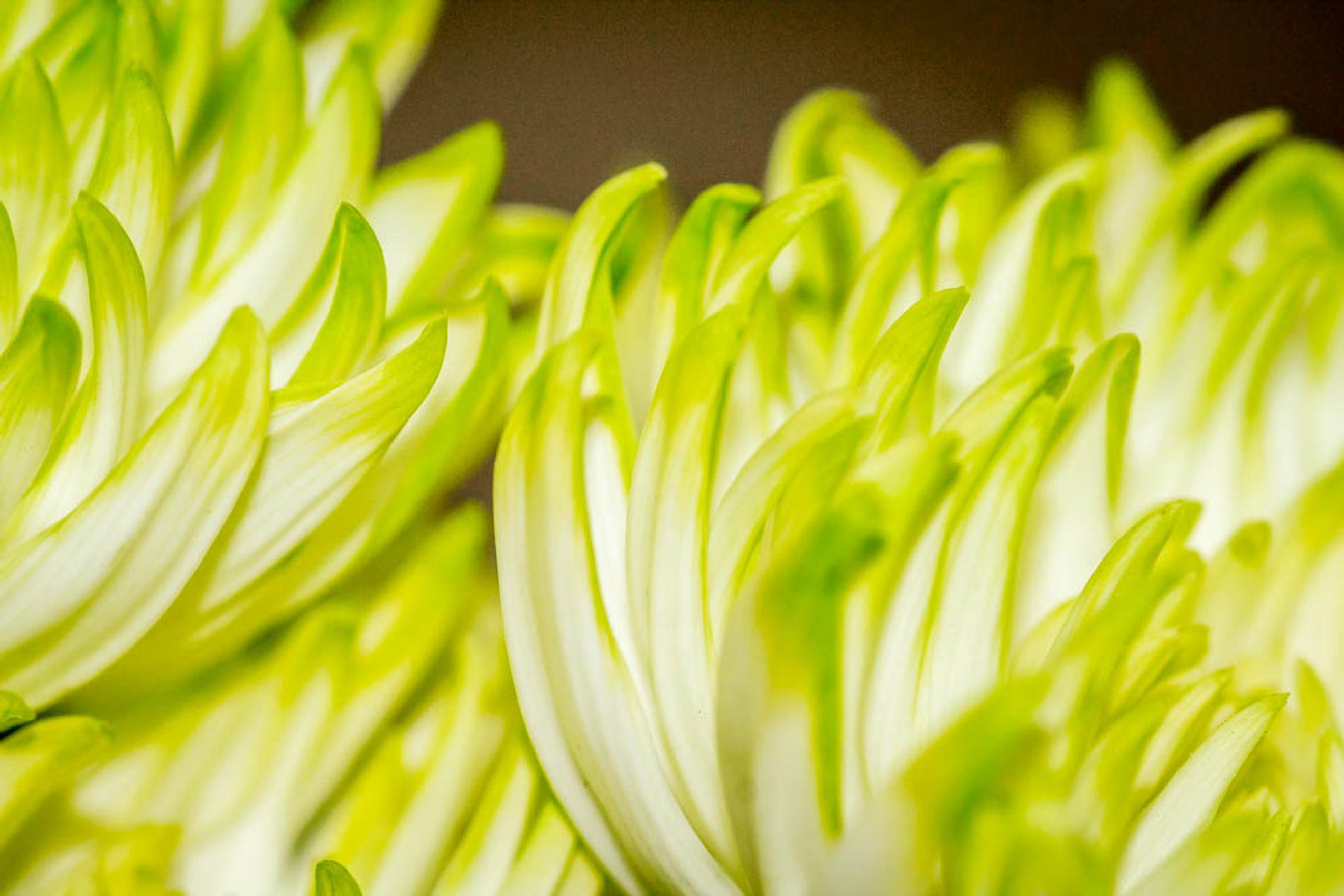 petals by debra godwin