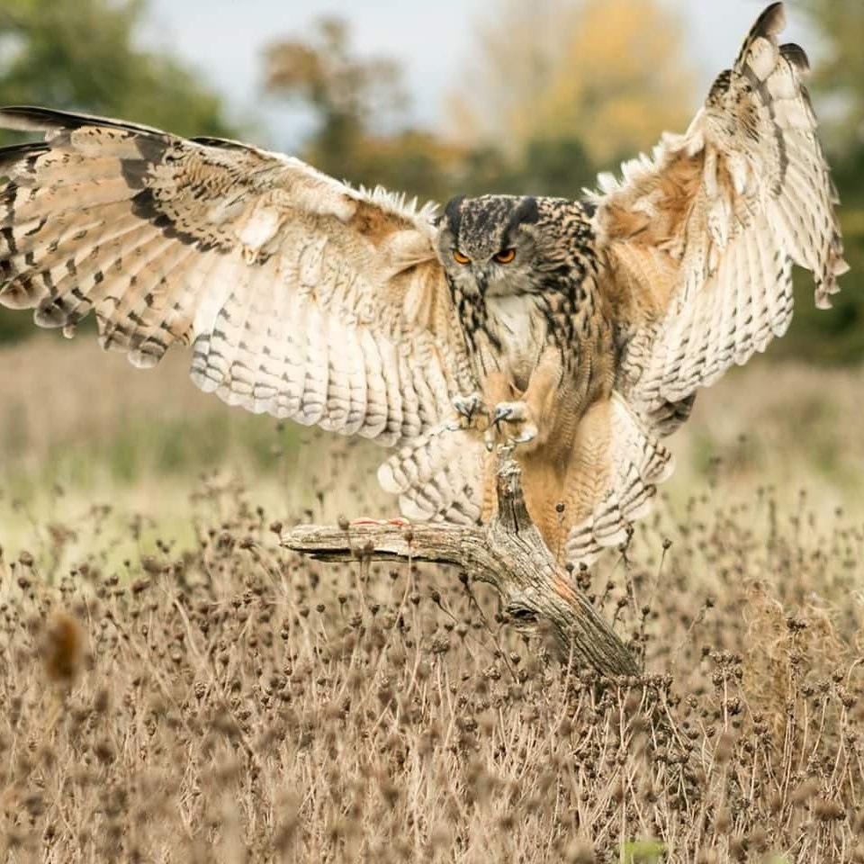 landing by debra godwin