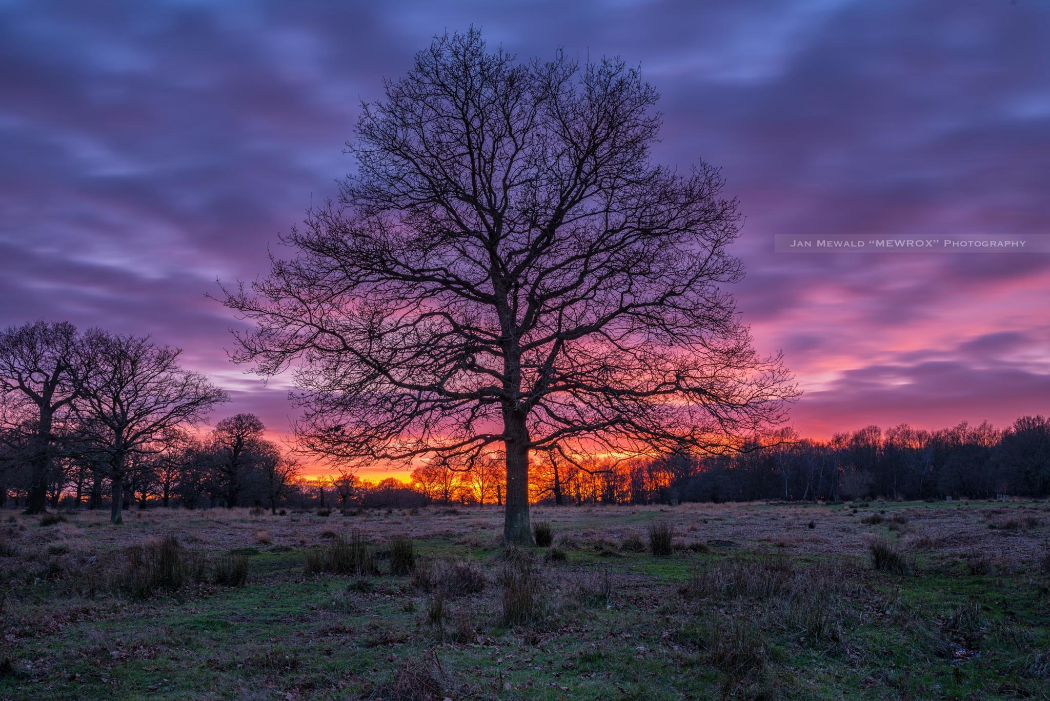 ~ lonely tree with beautiful sunset ~ by Jan.Mewald