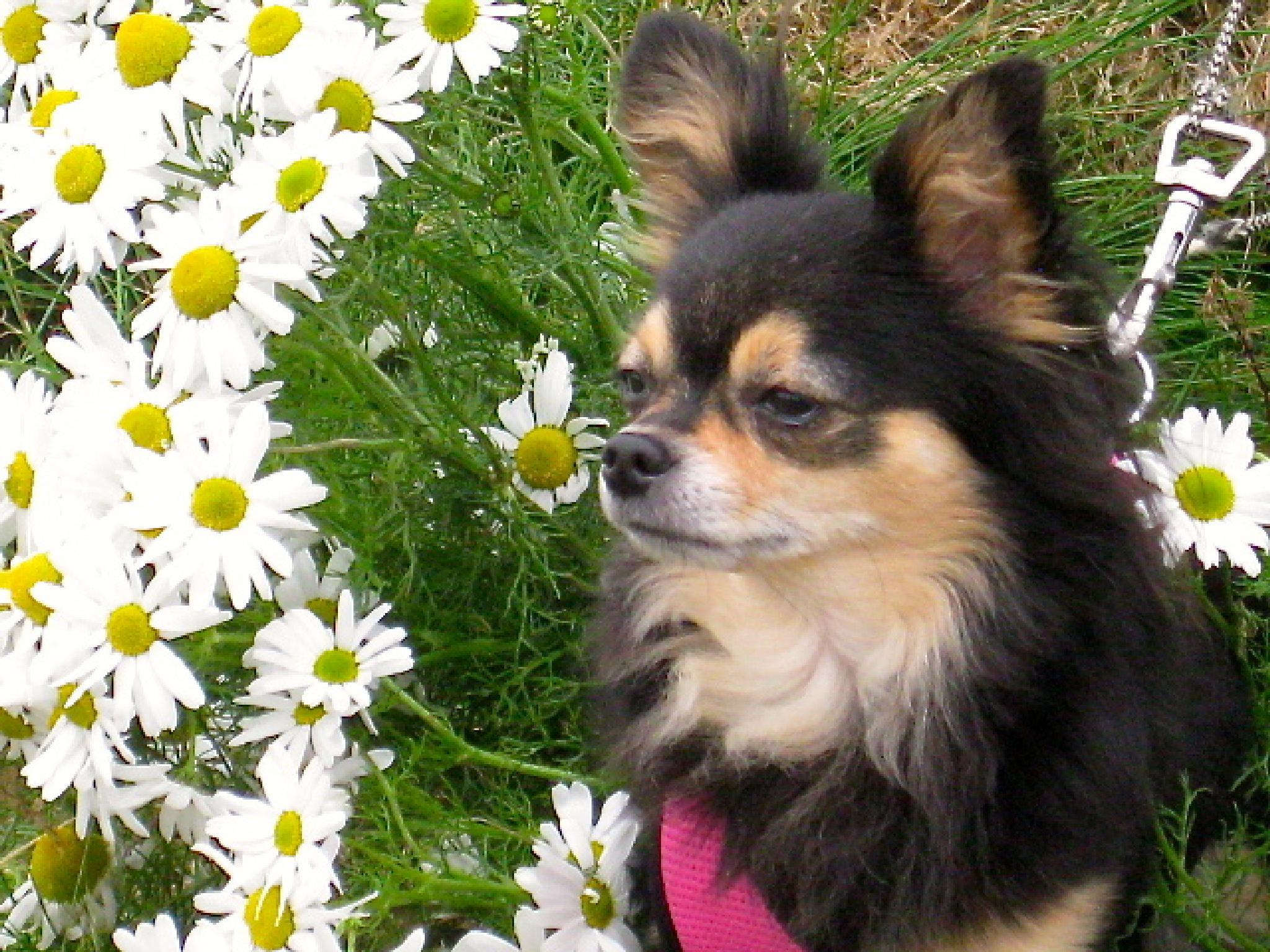 Mússa flowergirl :) by  Bjarklind