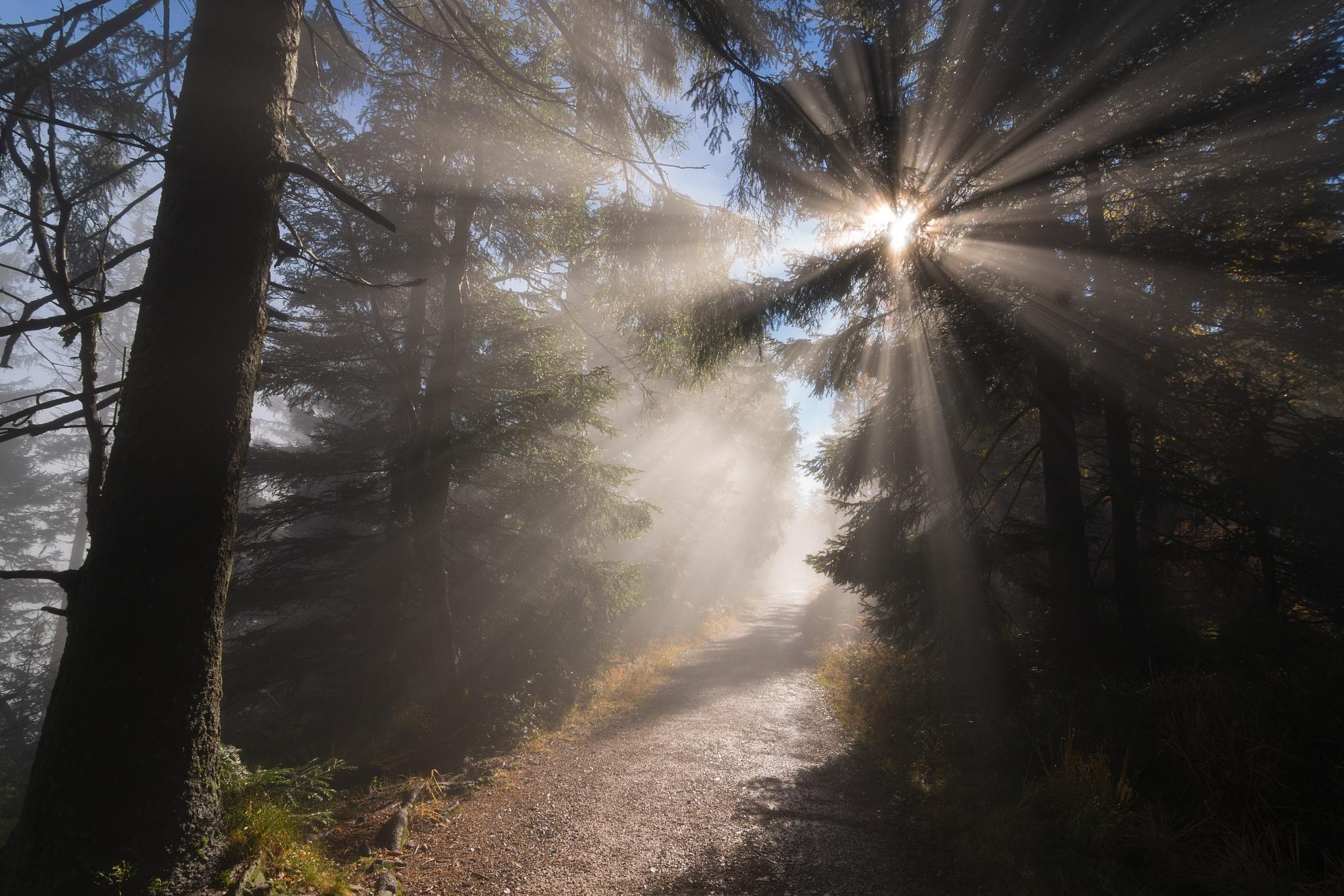 Light Hunter  by Fabian Müller