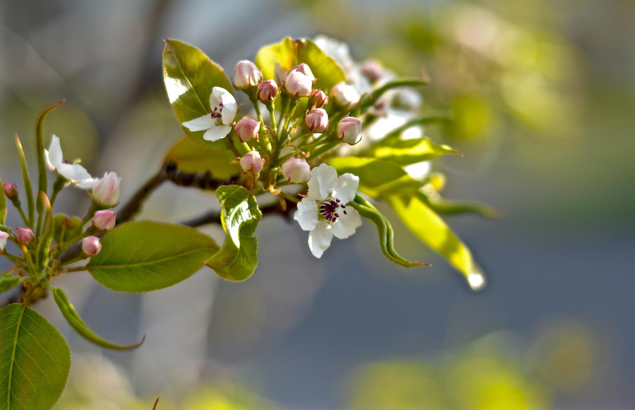 Photo in Macro #flower petal nature
