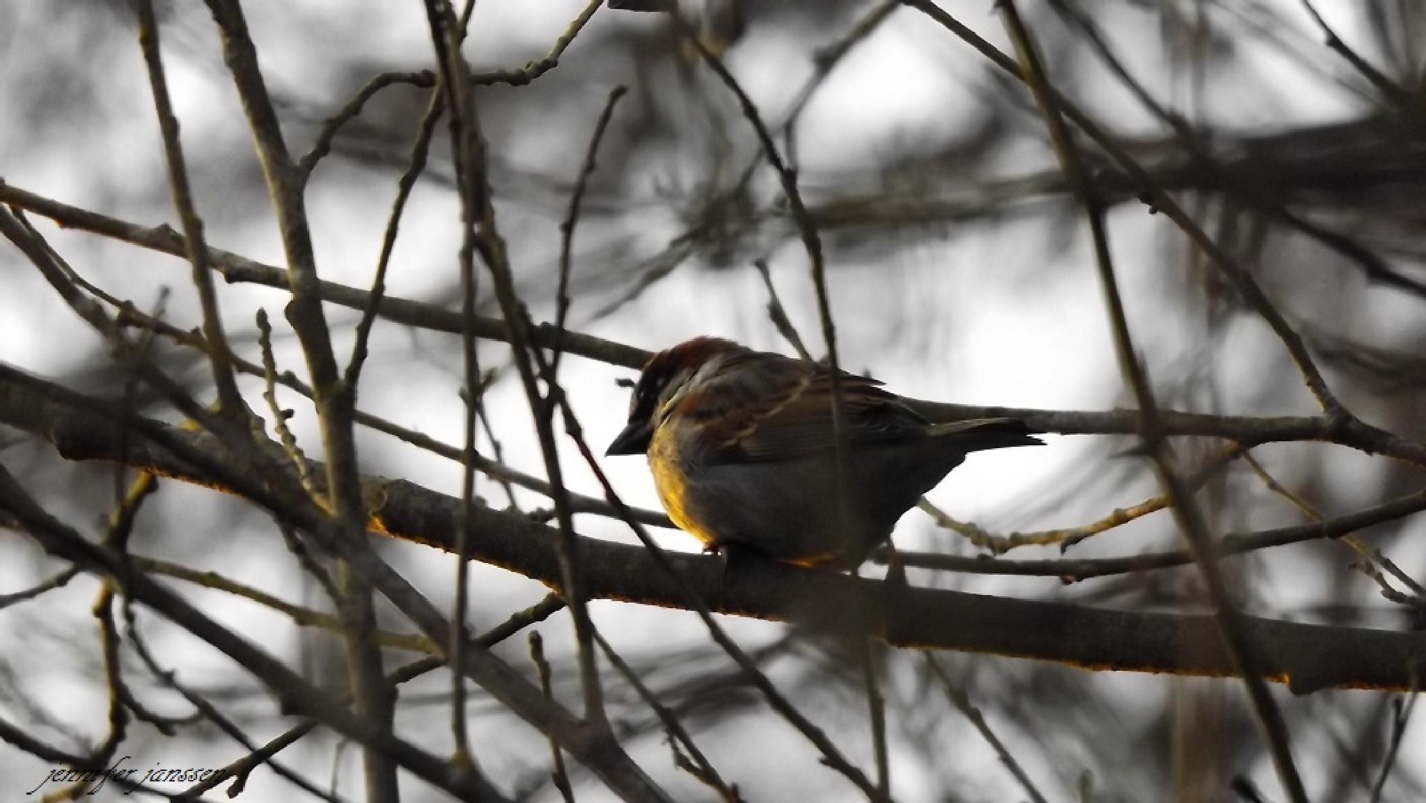 little birdy by bluibabi