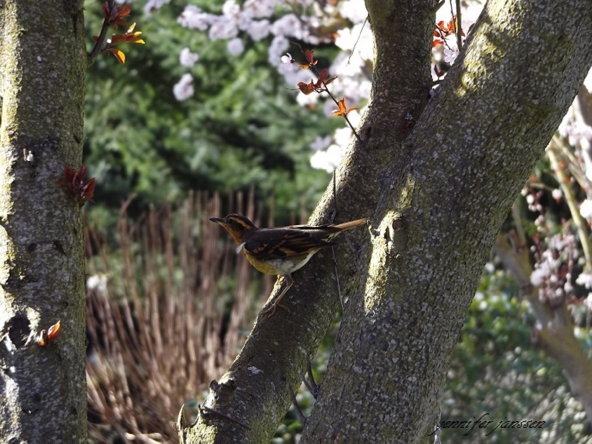 birdy perchin' by bluibabi