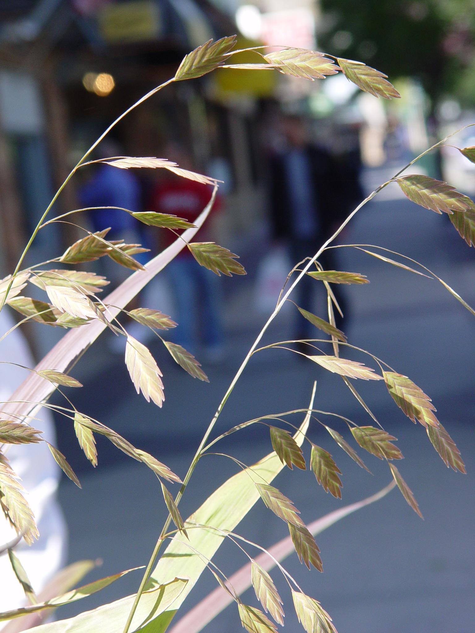 Ornamental Grass by Catherine Carver