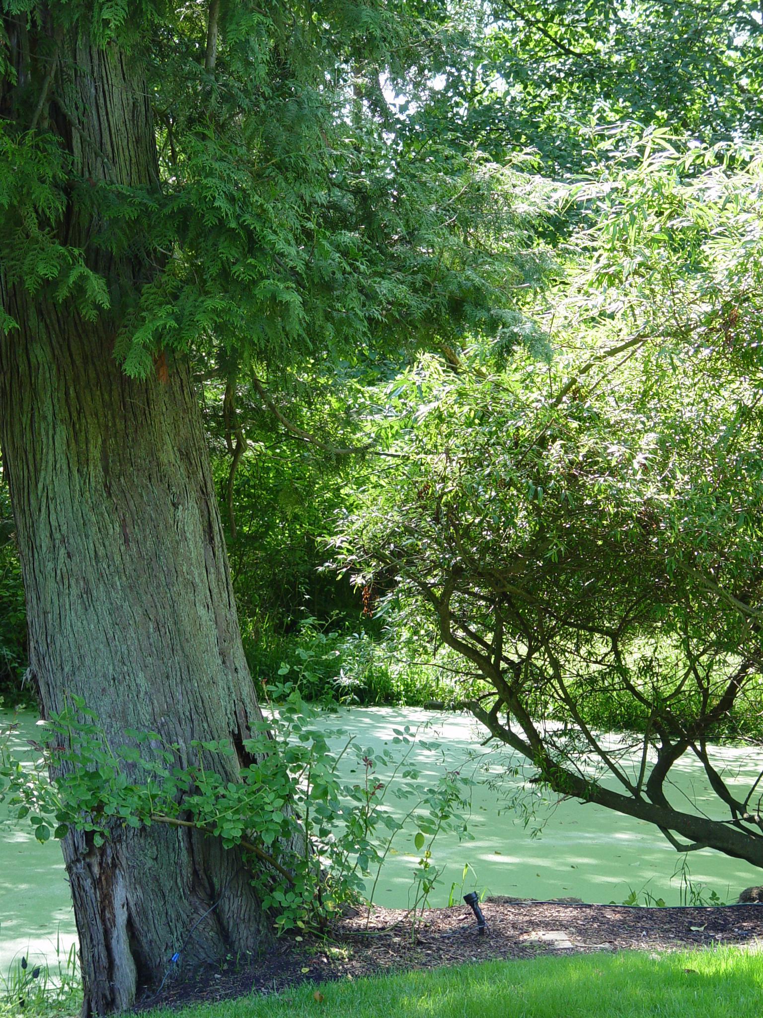 Roby's Pond by Catherine Carver
