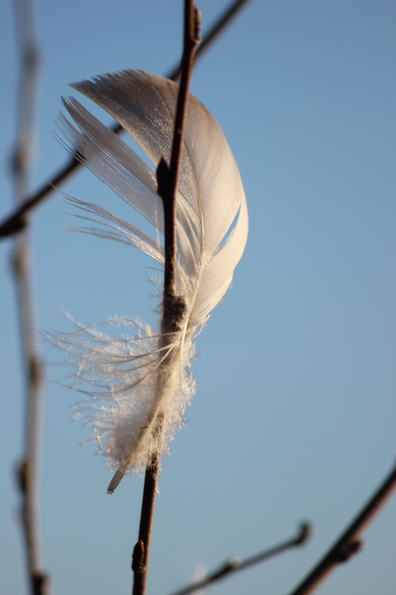 Feather by pernillamia