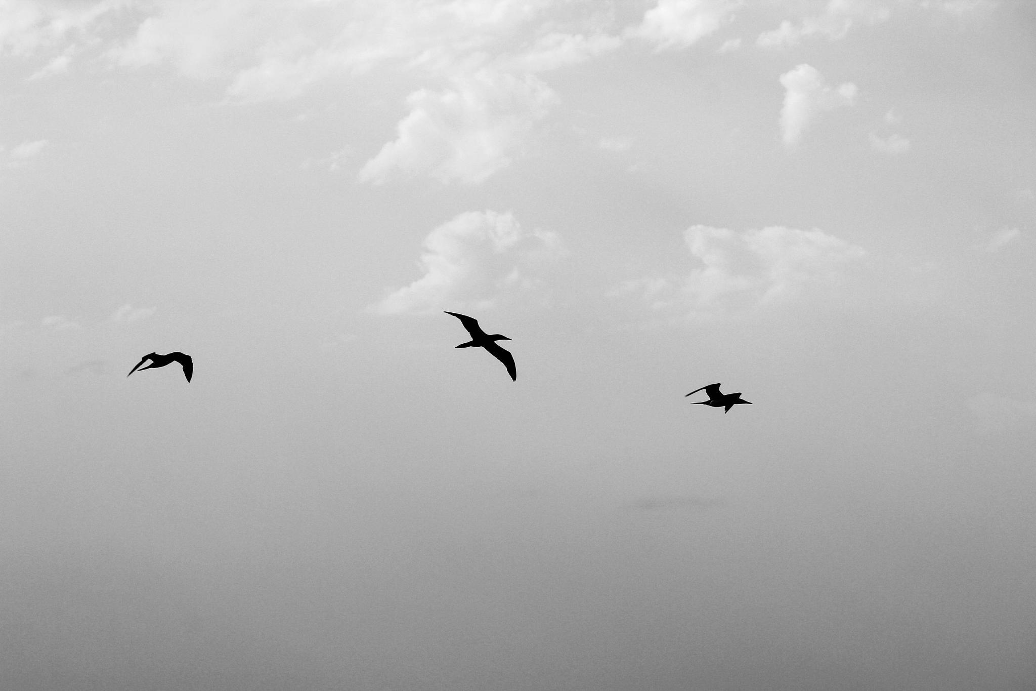 Black birds by pernillamia