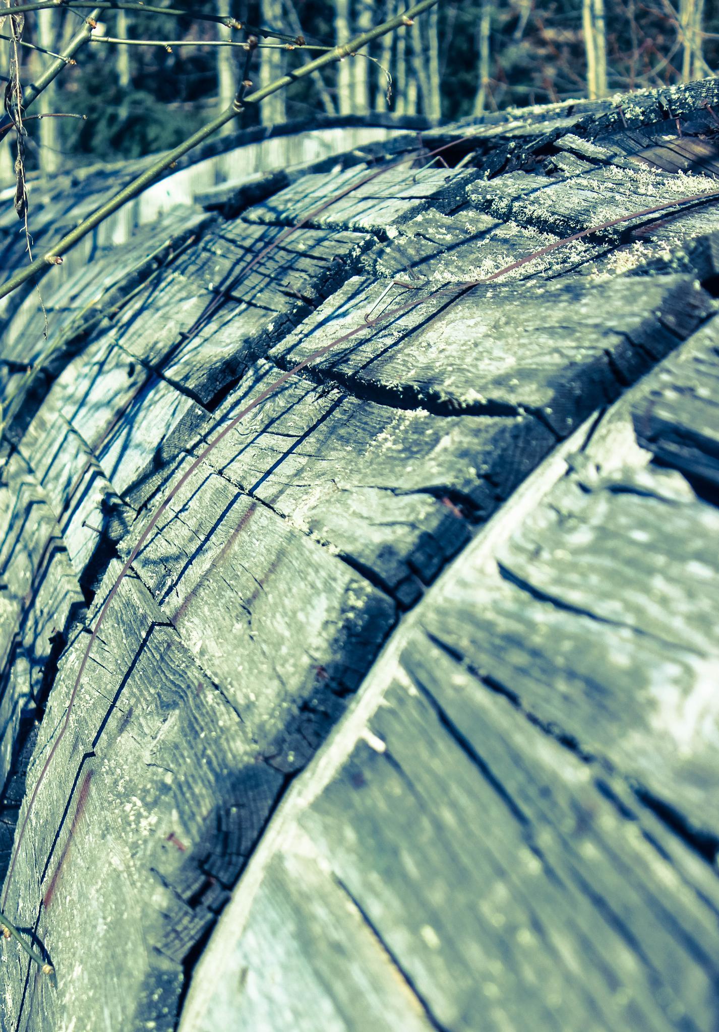 Tree in wood by pernillamia
