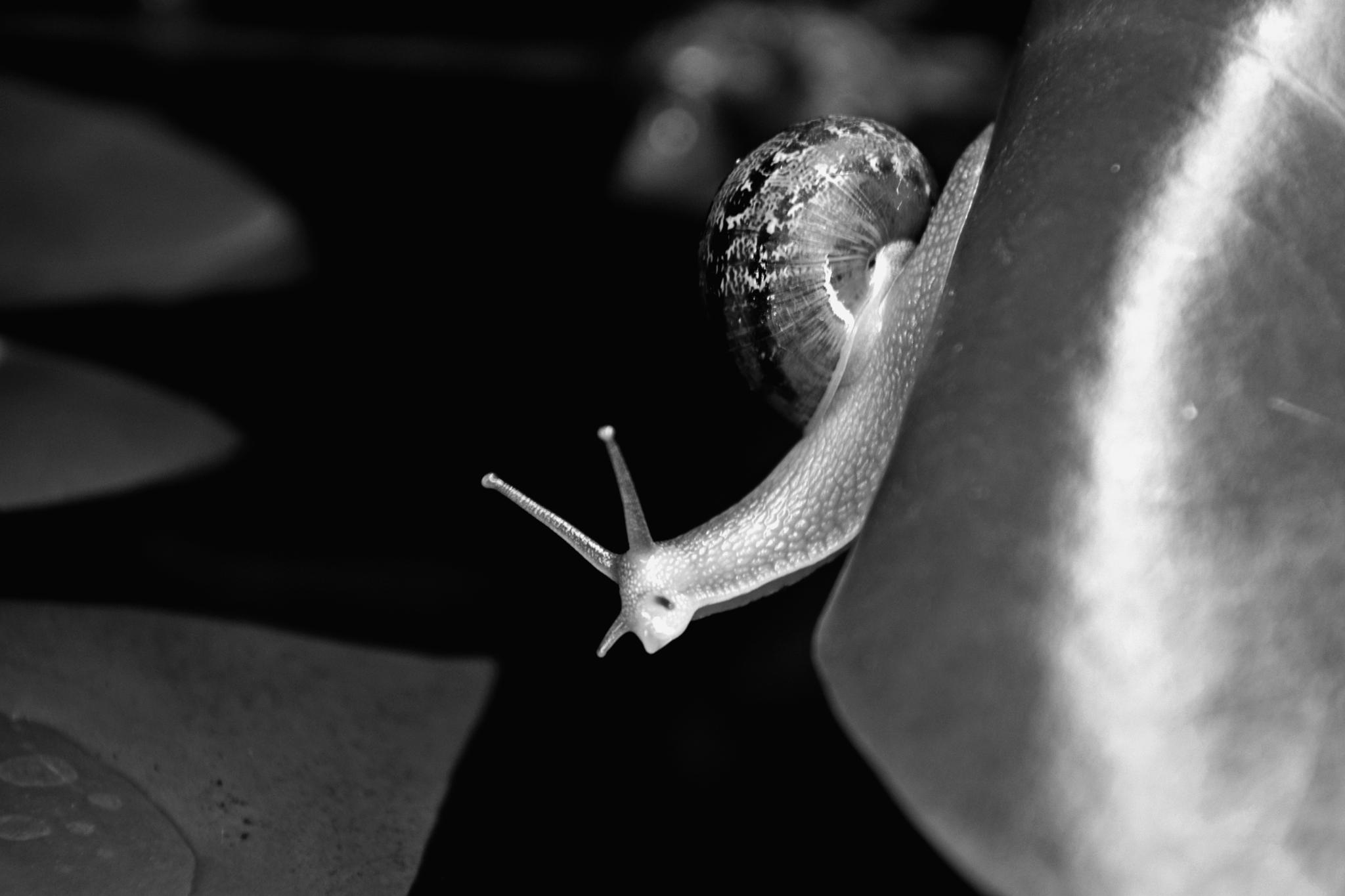 Snail 2 by rick.miller.5817300